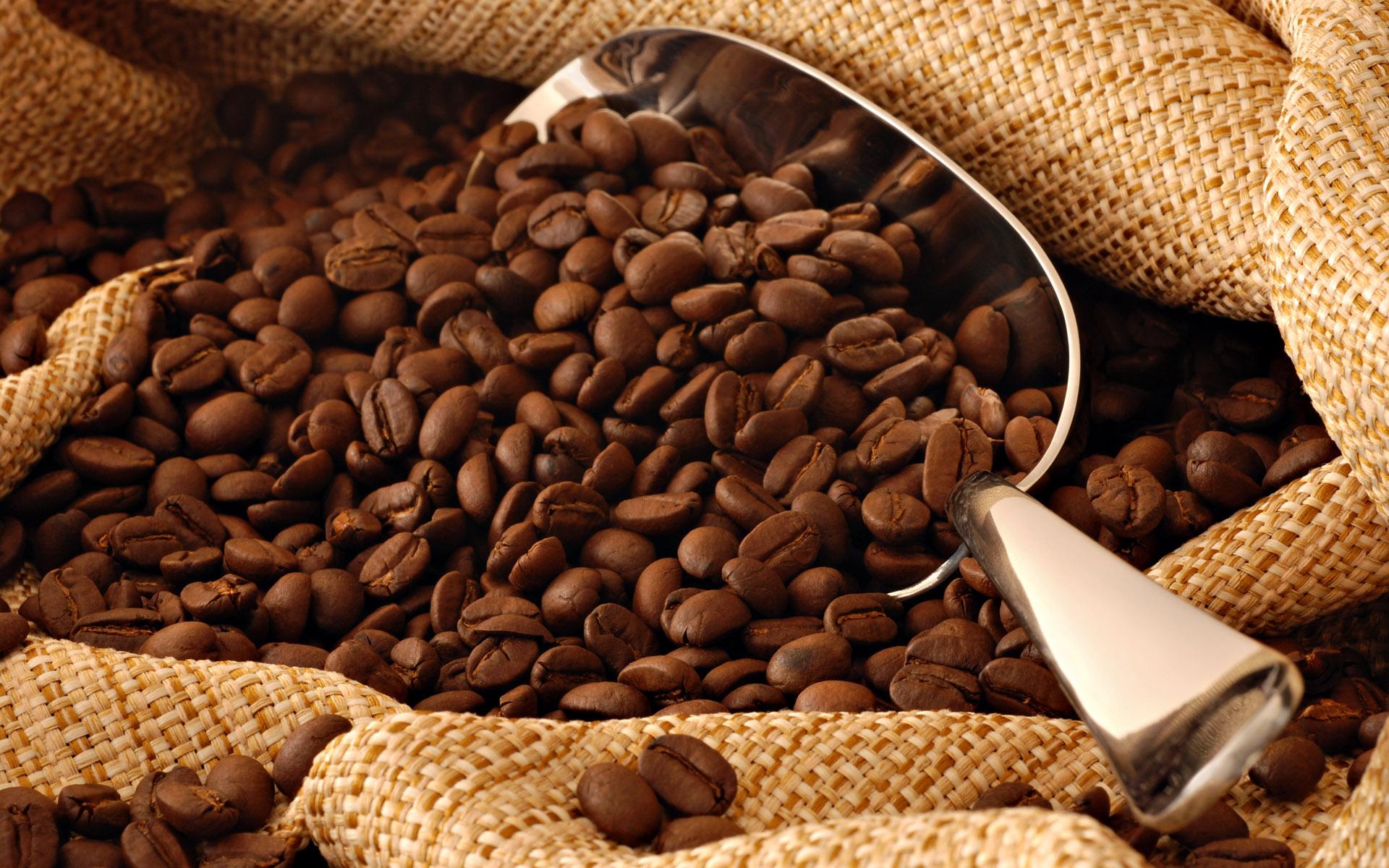 Kopi Luwak Coffee - Kopi Luwak Direct