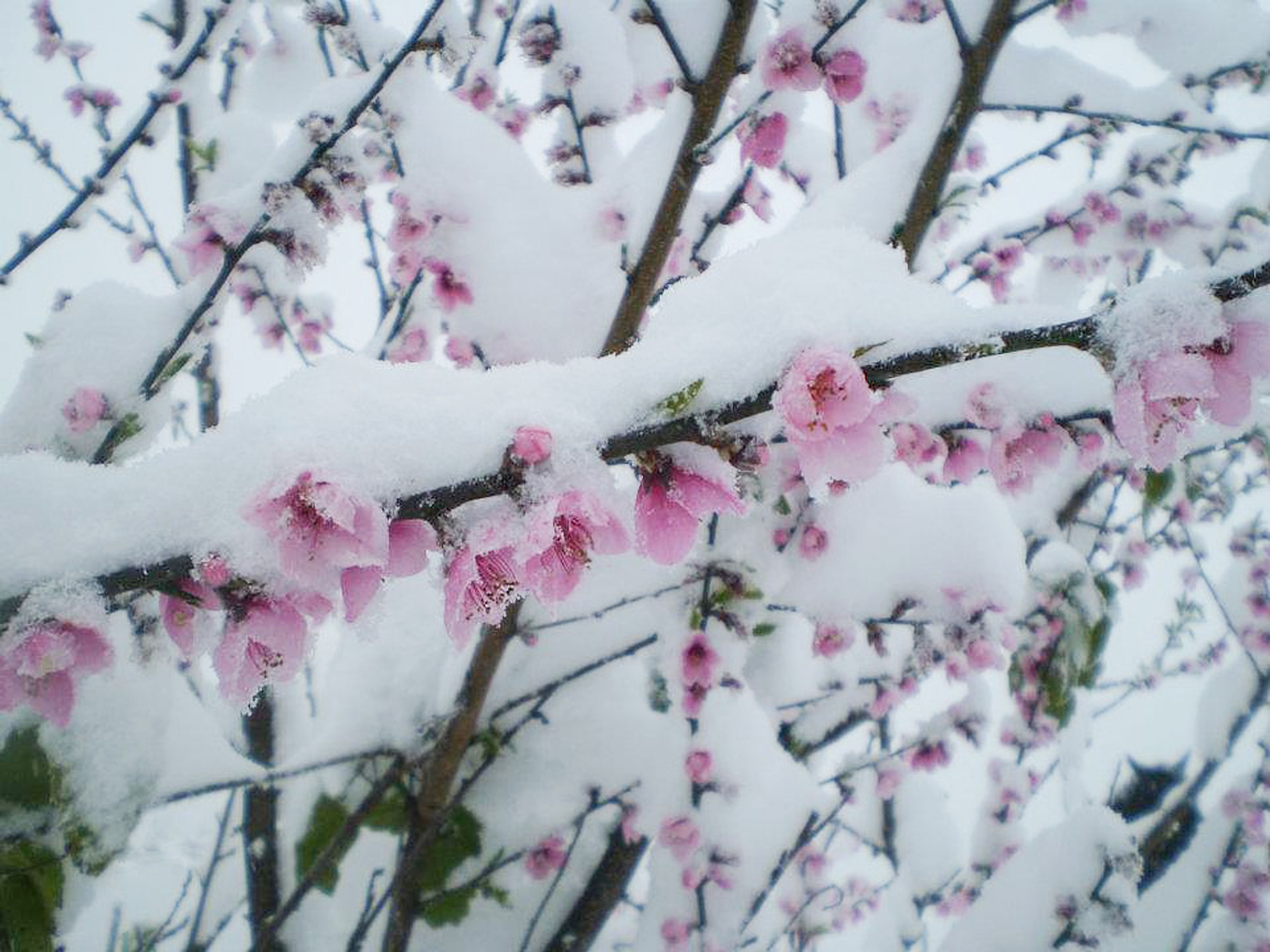 Cold Weather Blooms
