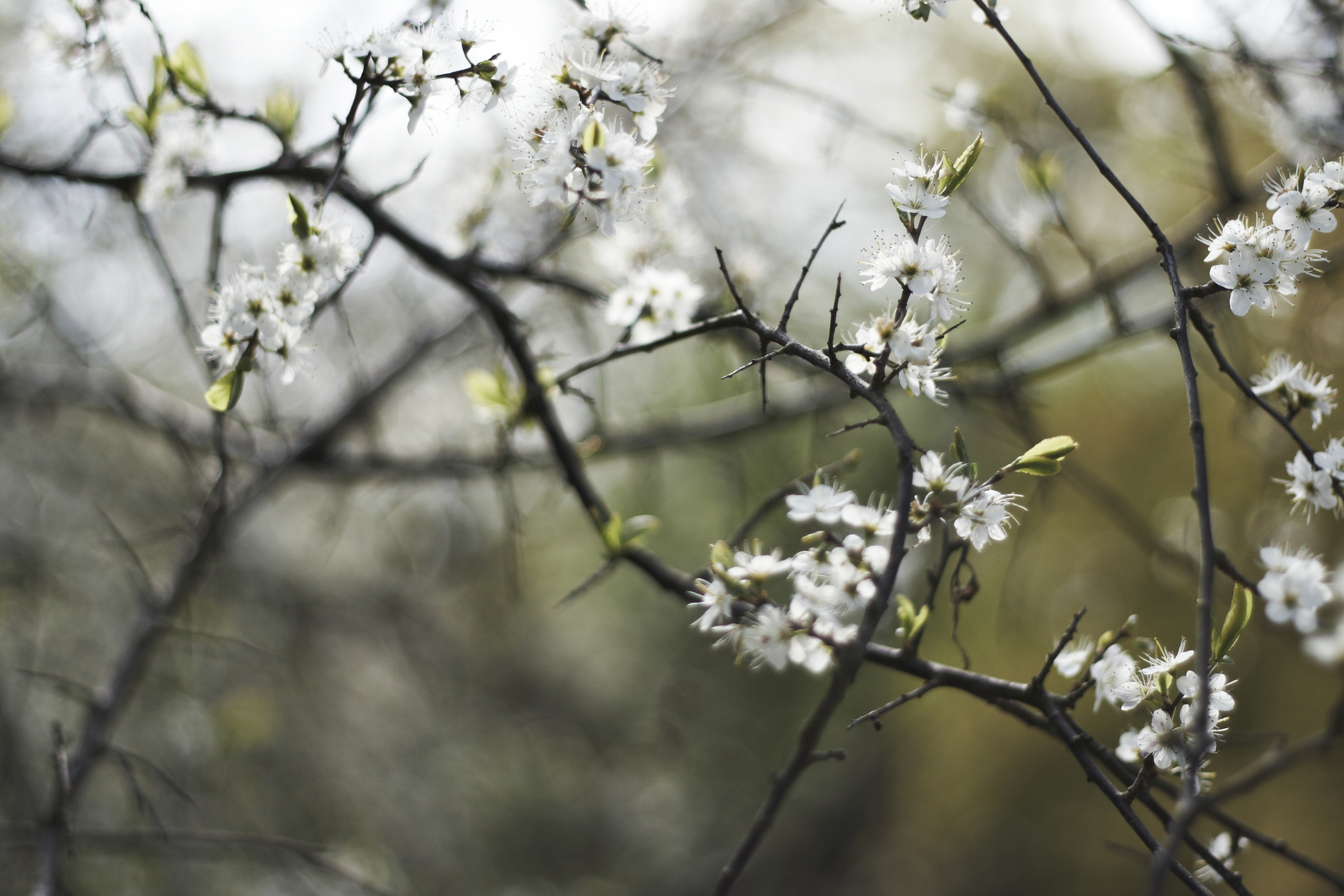 Cold Flowers, Branches, Brown, Cold, Flowers, HQ Photo