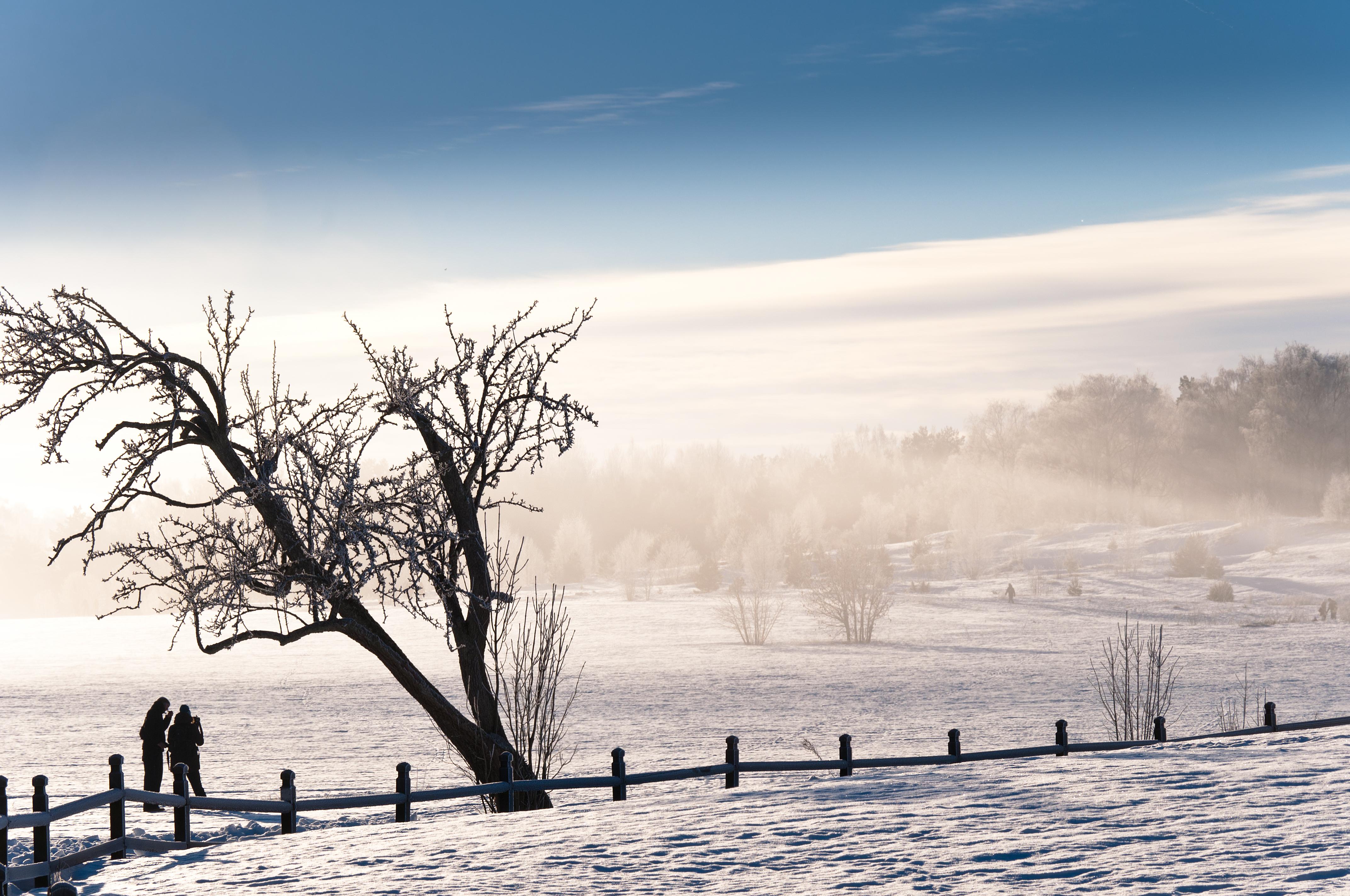 Cold winter morning in old Uppsala, Cold, Landscape, Mist, Morning, HQ Photo
