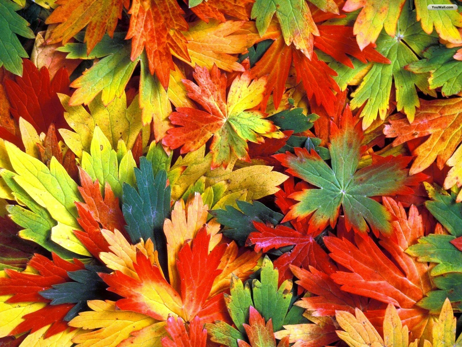 Colorful Autumn Leaves Photo