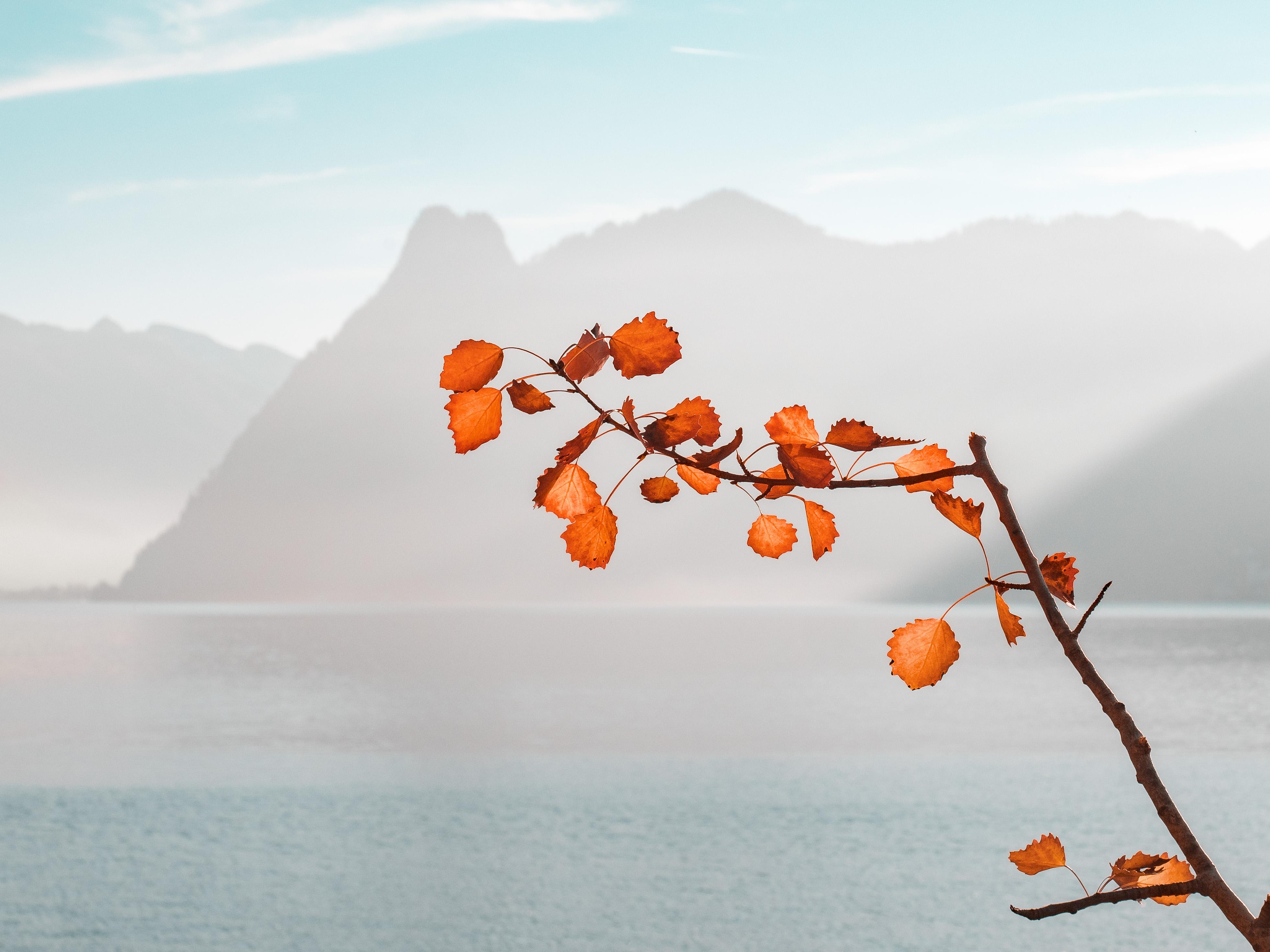 Colorful autumn leaves. photo