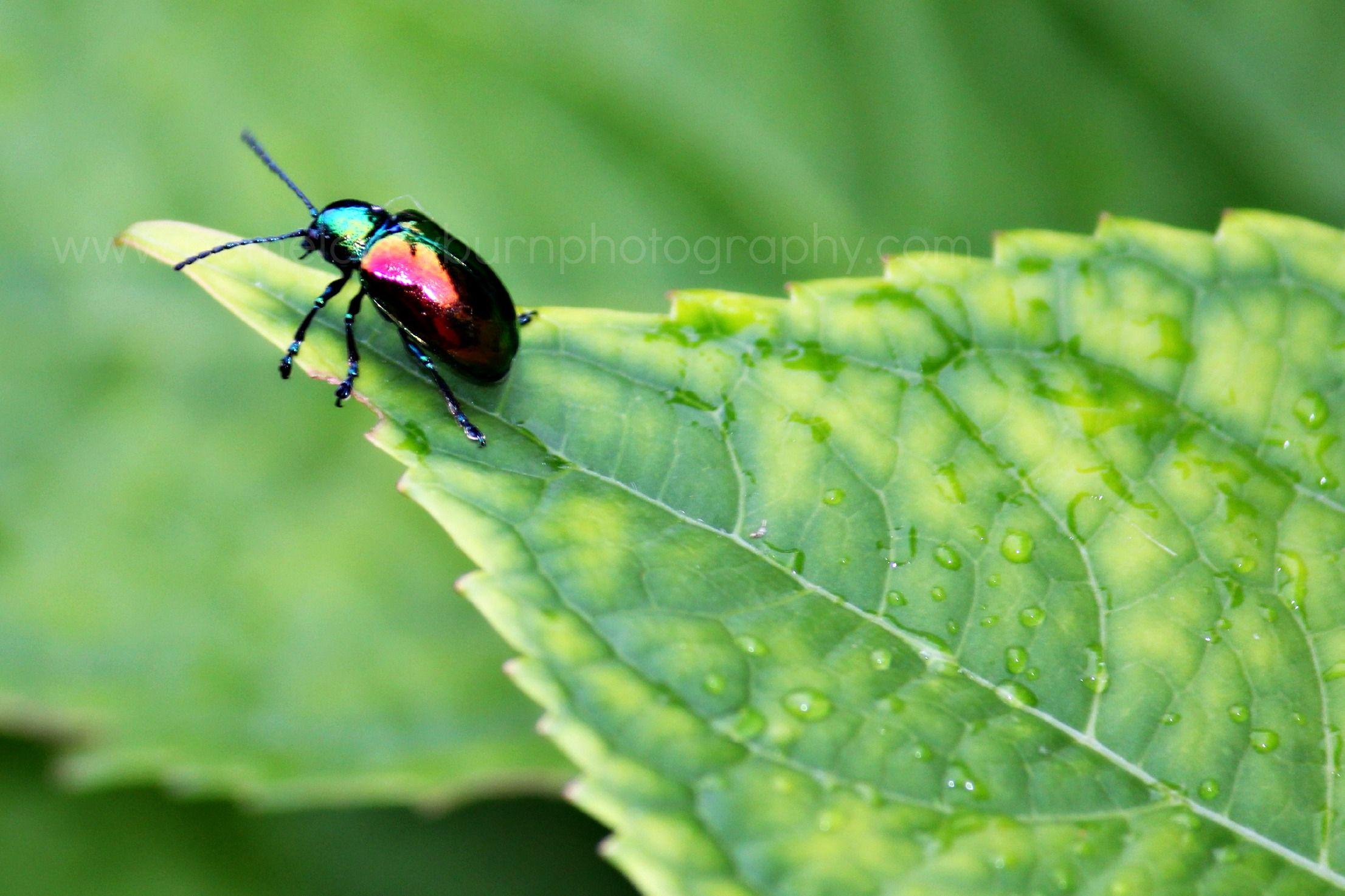 Colorful beetle photo