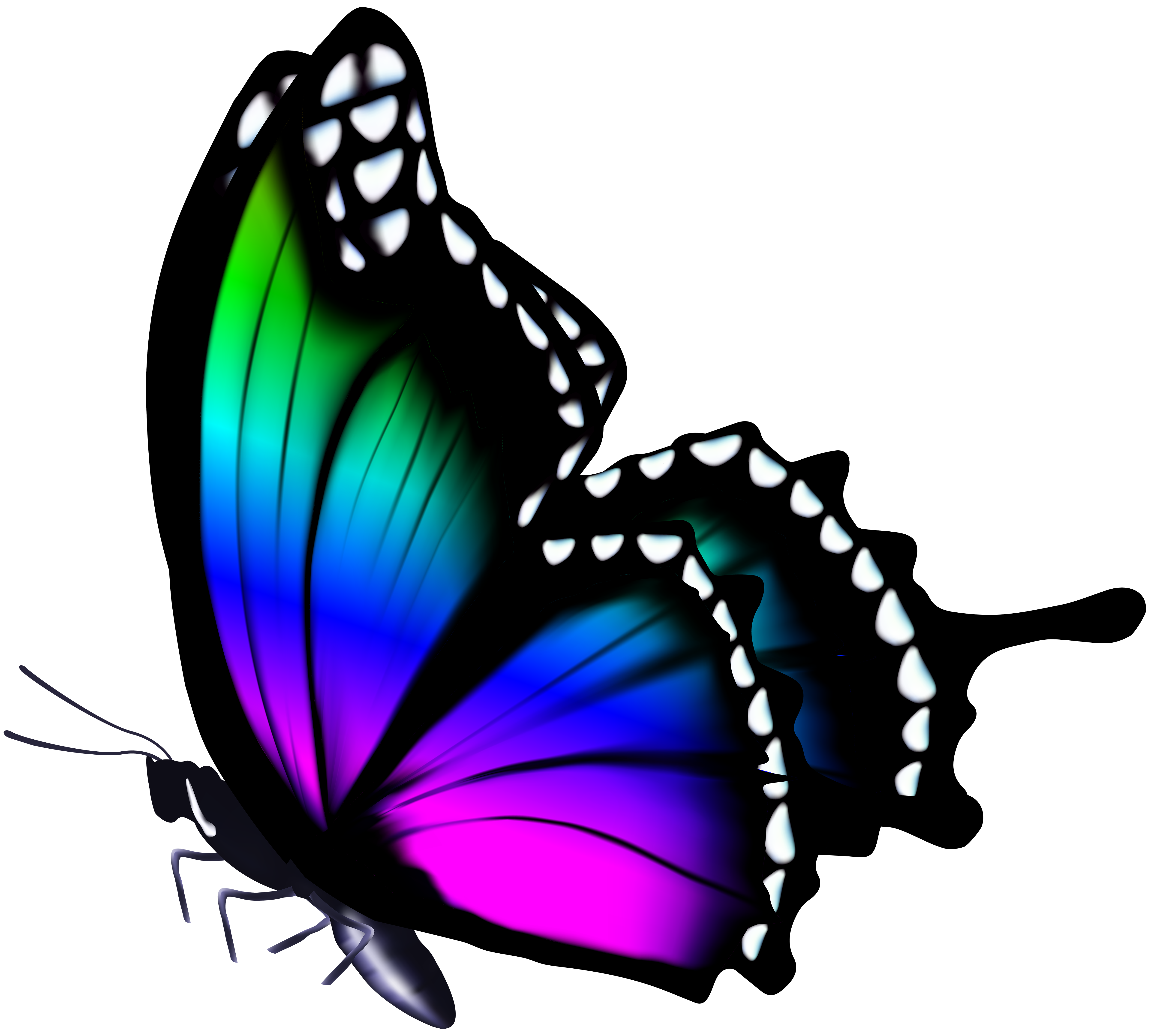 Free photo: Colorful Butterfly - nature, wild, insect - Creative ...