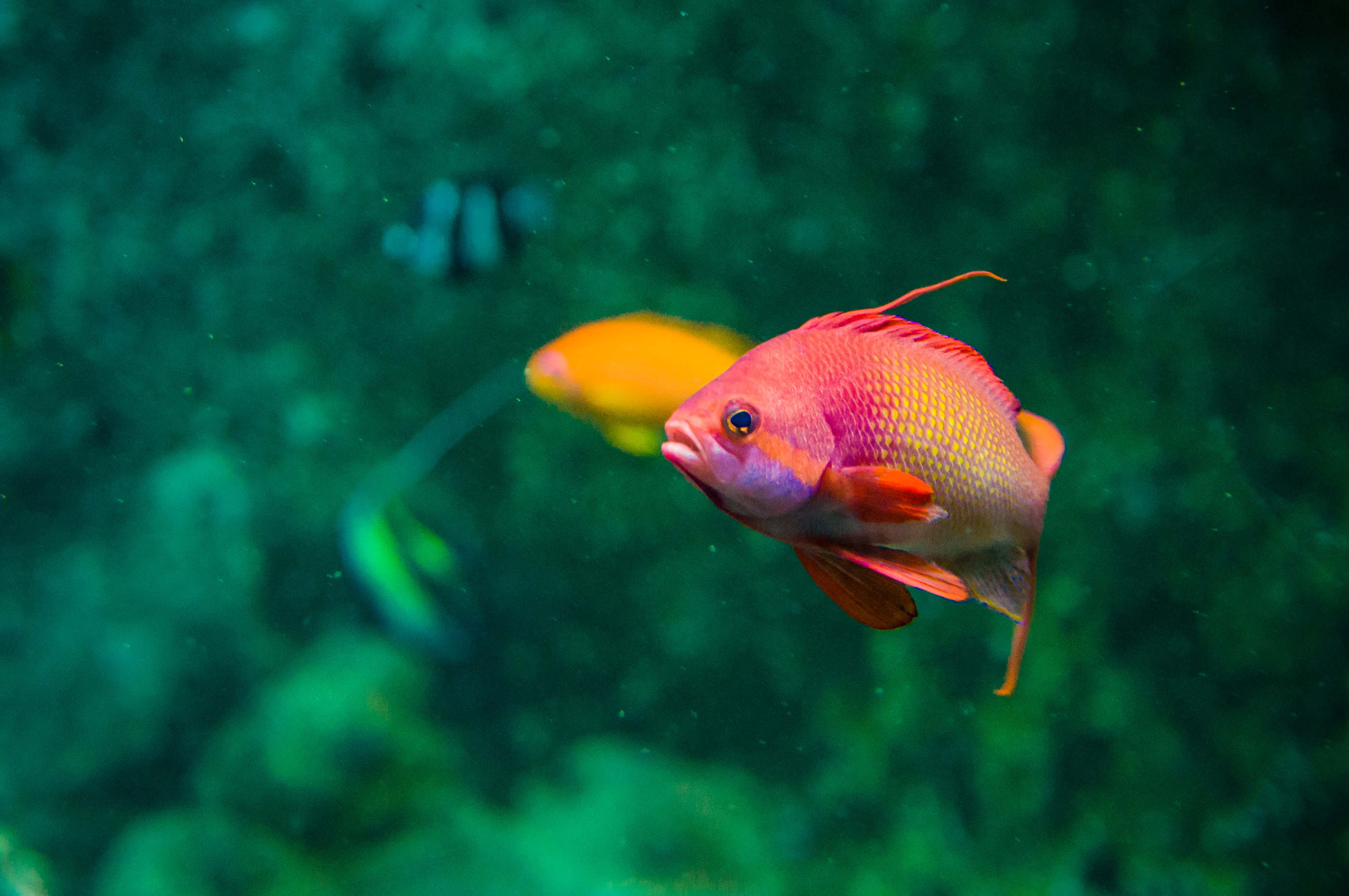 Free photo: colorful fish - Seascape, Sea, Small - Free Download ...