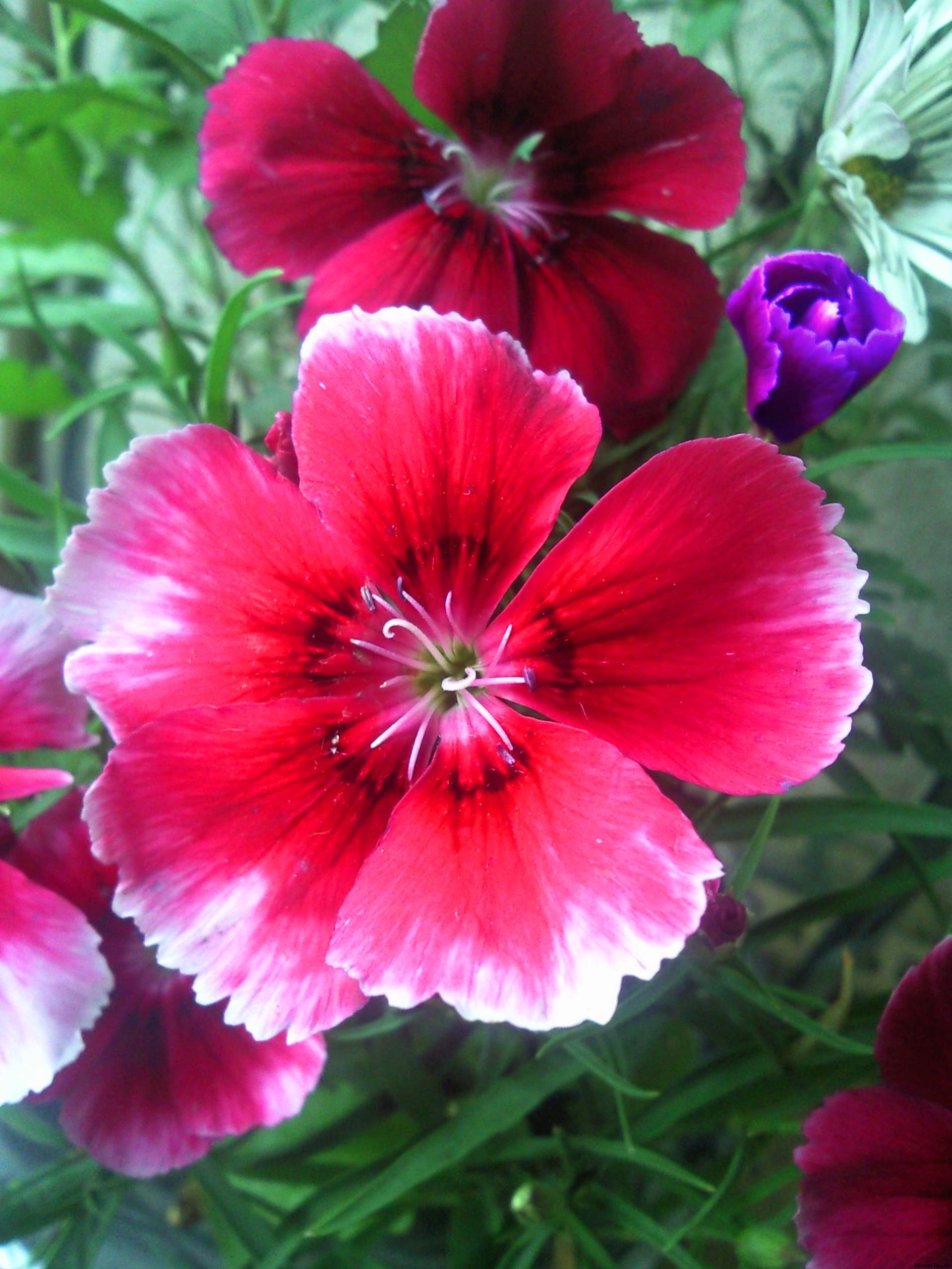 Free photo colorful flower pretty red vivid free download colorful flower izmirmasajfo