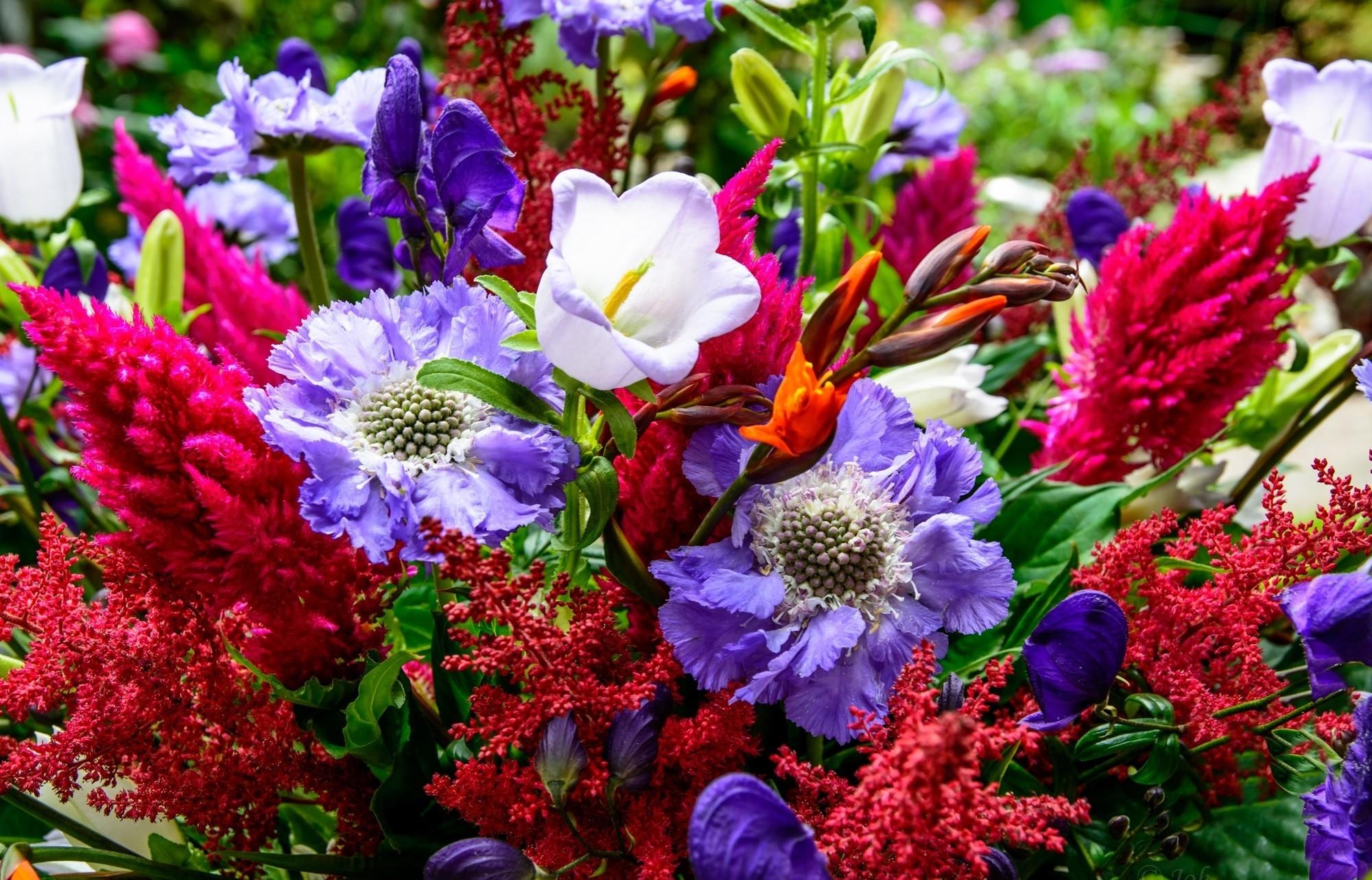 Free photo colorful flower sky pretty skies free download colorful flower mightylinksfo