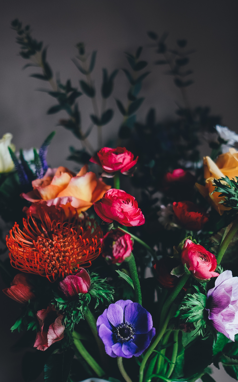 Free photo: Colorful Flowers - nature, rose, tulip - Creative ...