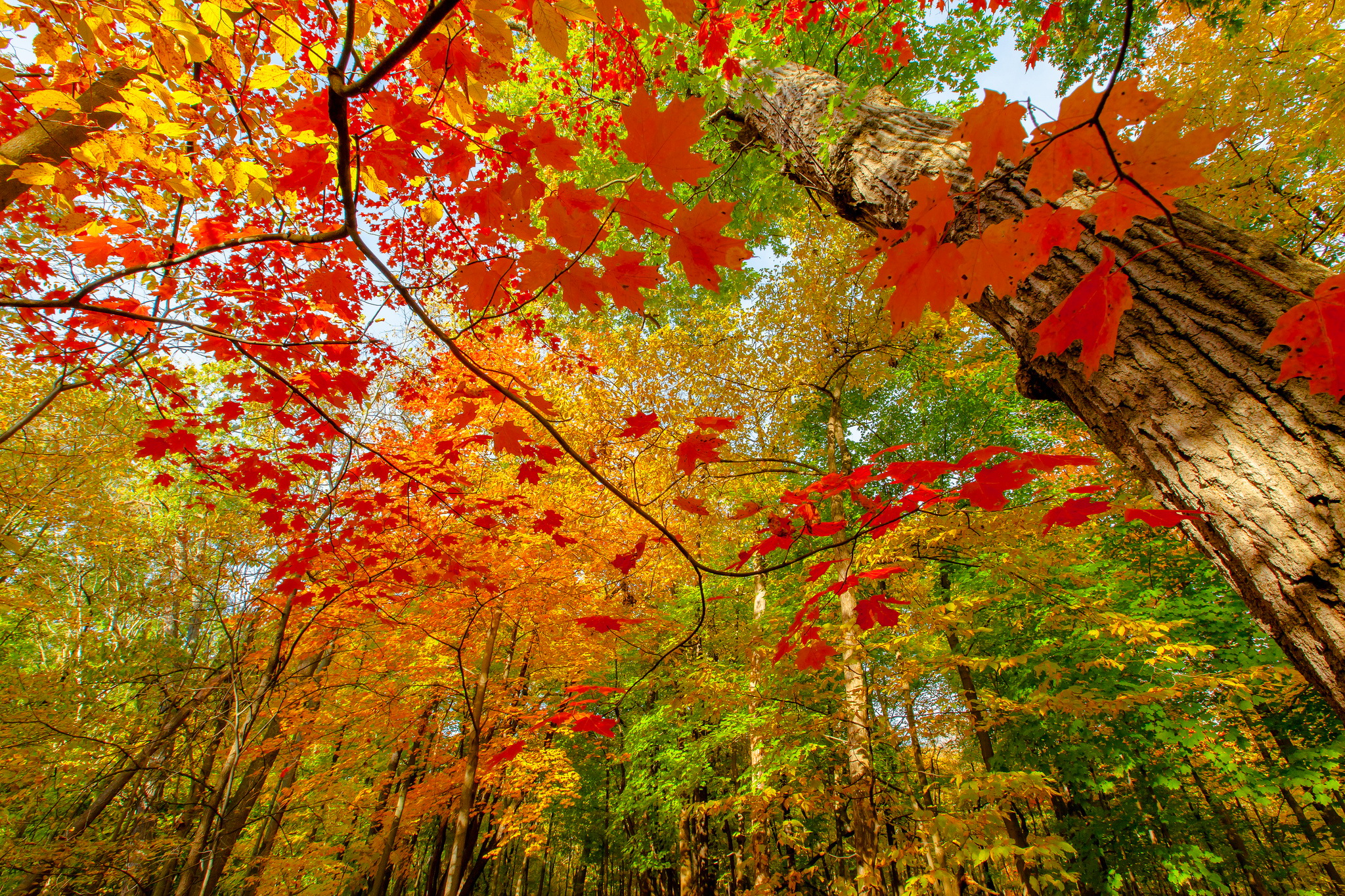 Colorful Leaves Wallpaper 30079 2048x1365 px ~ HDWallSource.com