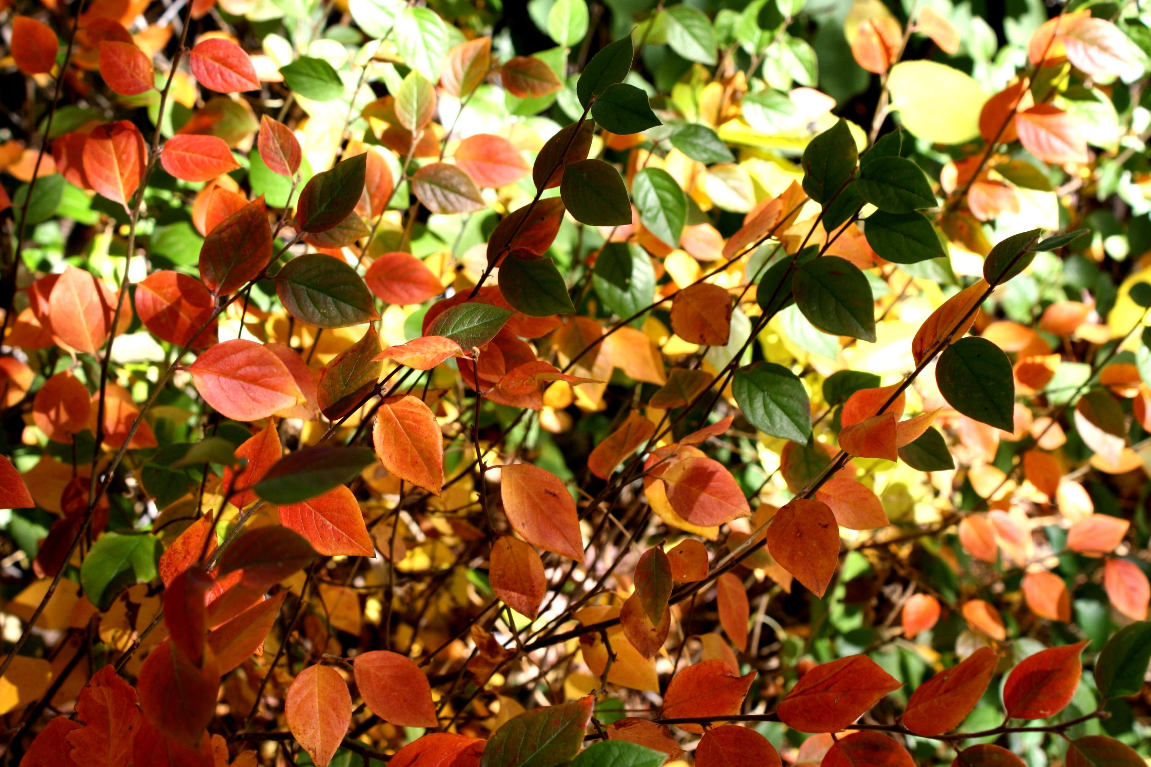 Free picture: colorful leaves, autumn, leaves, texture