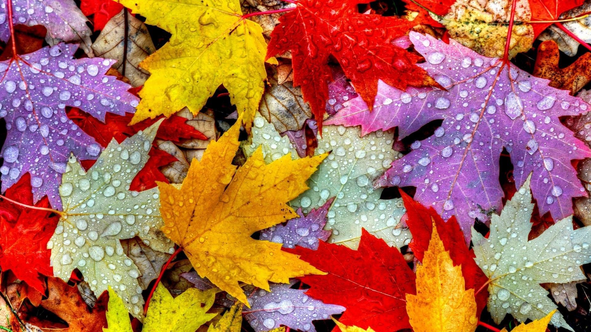 Colorful Maple Leaves Wallpaper | Wallpaper Studio 10 | Tens of ...