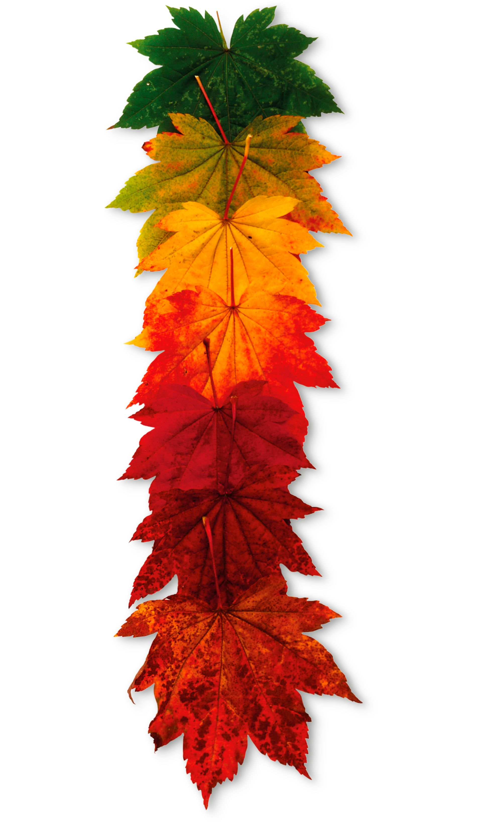 Why do Leaves Change Color | Seasonal Plants | DK Find Out