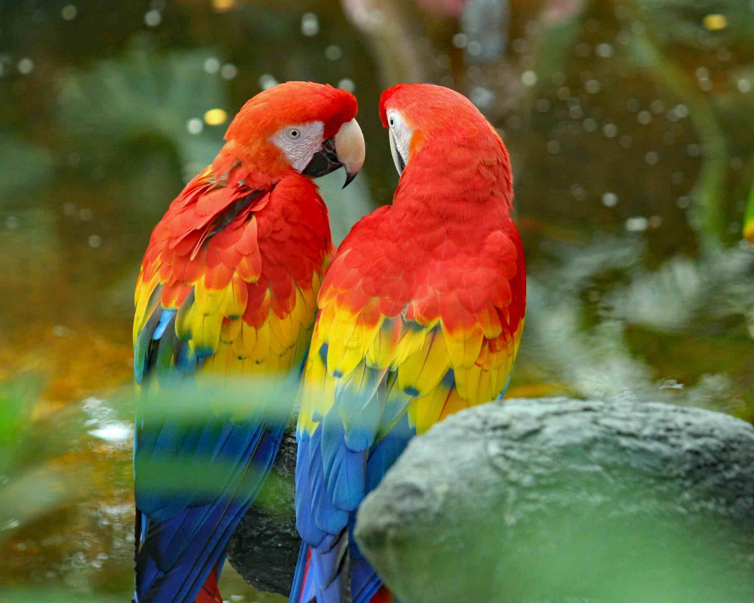 Red parrot bird photo