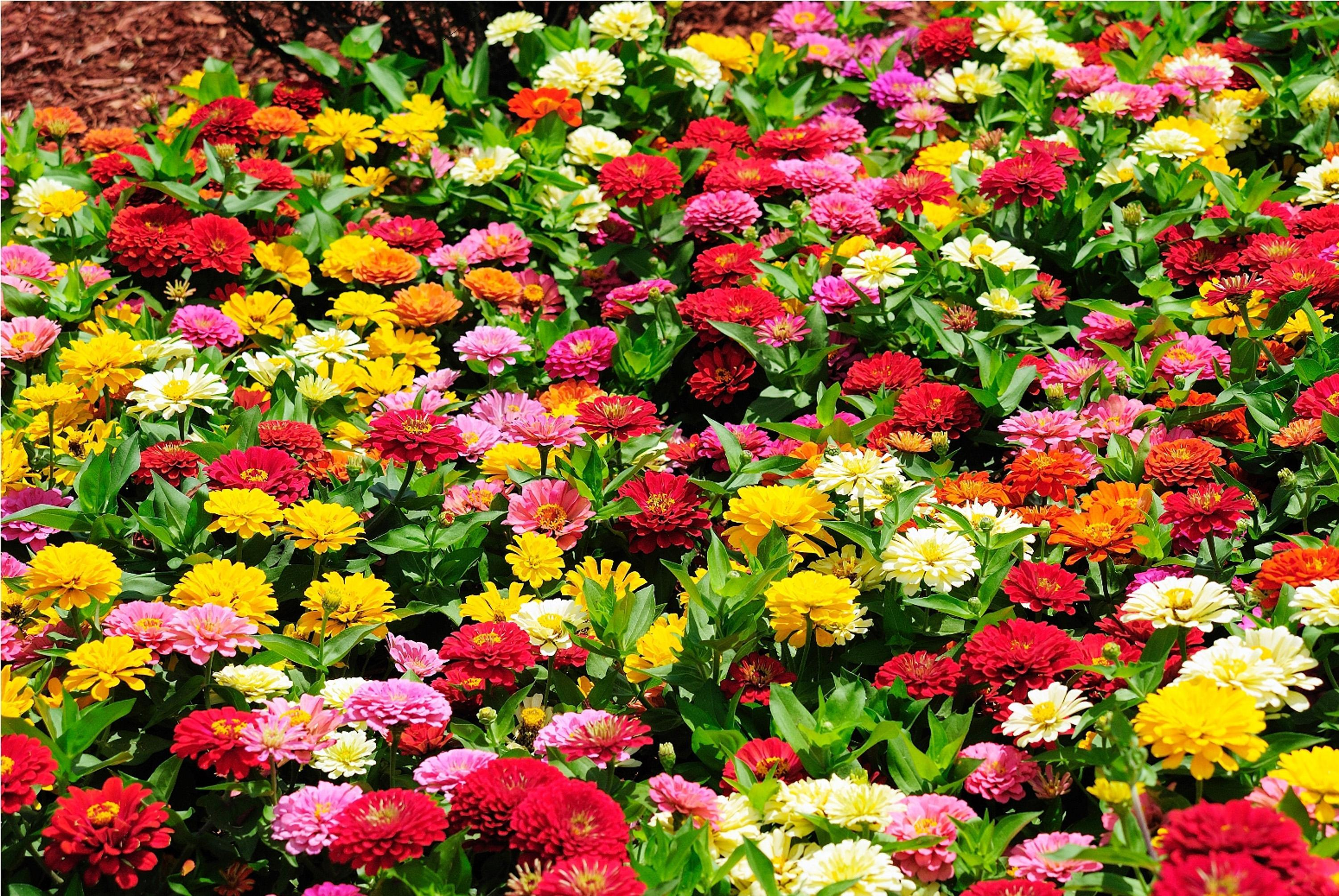 Free photo colorful summer flower outdoors nature plant non colorful summer flower mightylinksfo