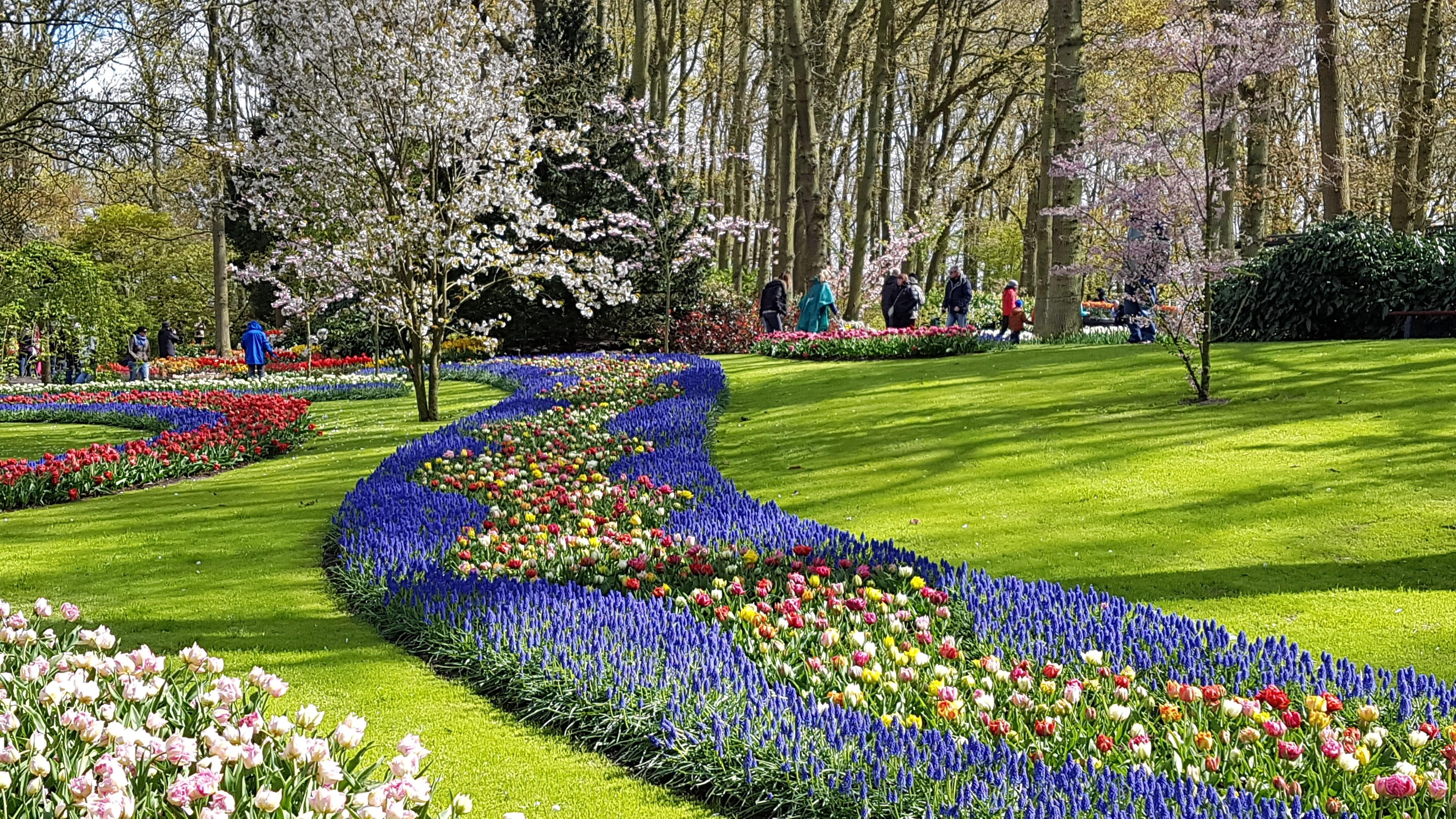 Colorful-tulip-flowers-Keukenhof-Holland, Colorful-tulip-flowers-Keukenhof-Holland