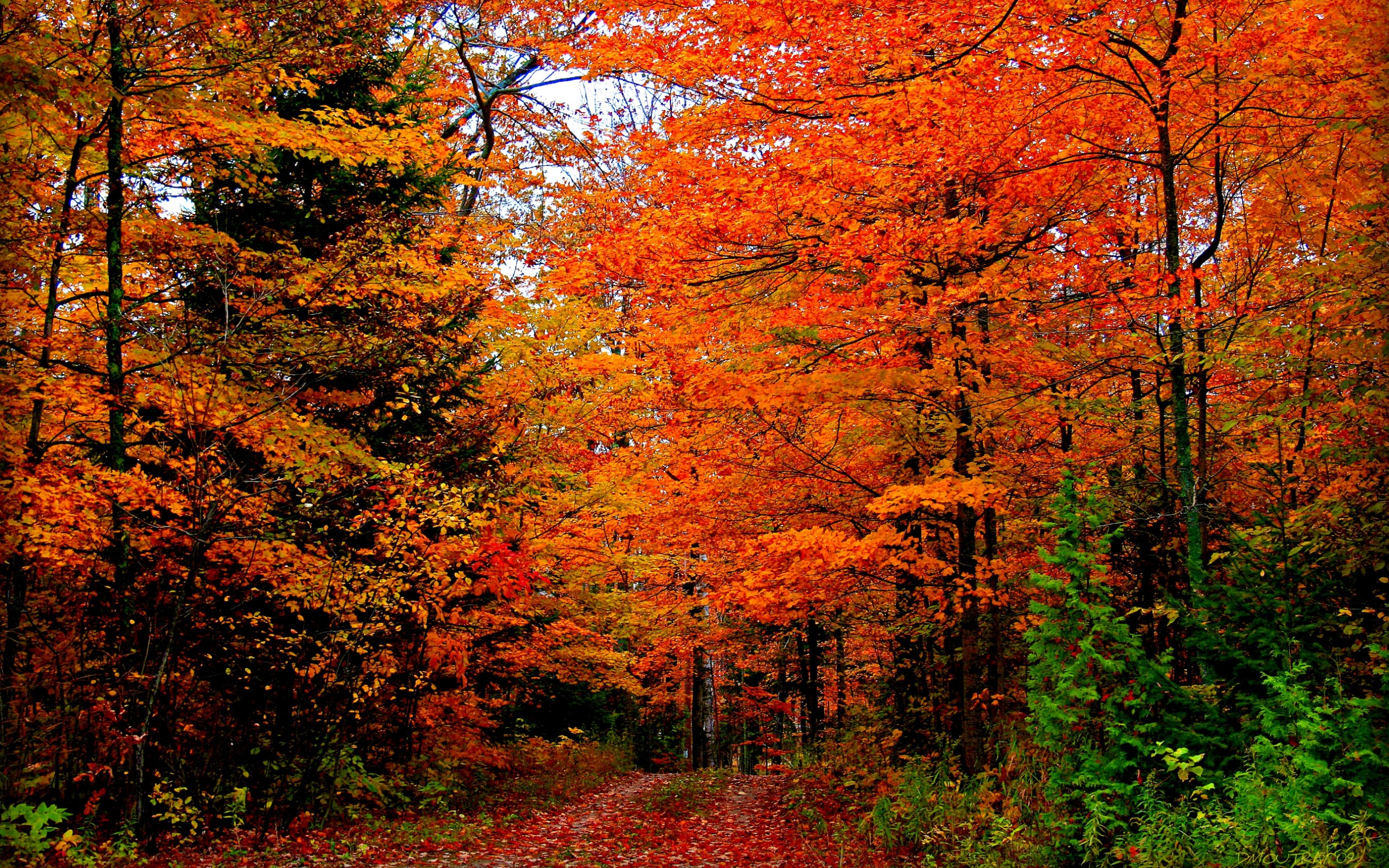 Autumn Free Wallpaper - Autumn Colors Wallpapers - HD Wallpapers 93175