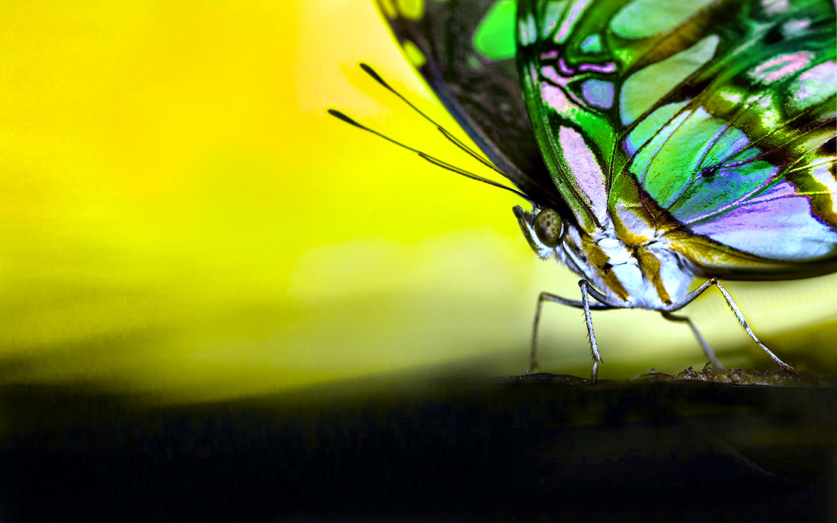BUTTERFLY [02] colors of nature [19may2013sunday] [204537 ...