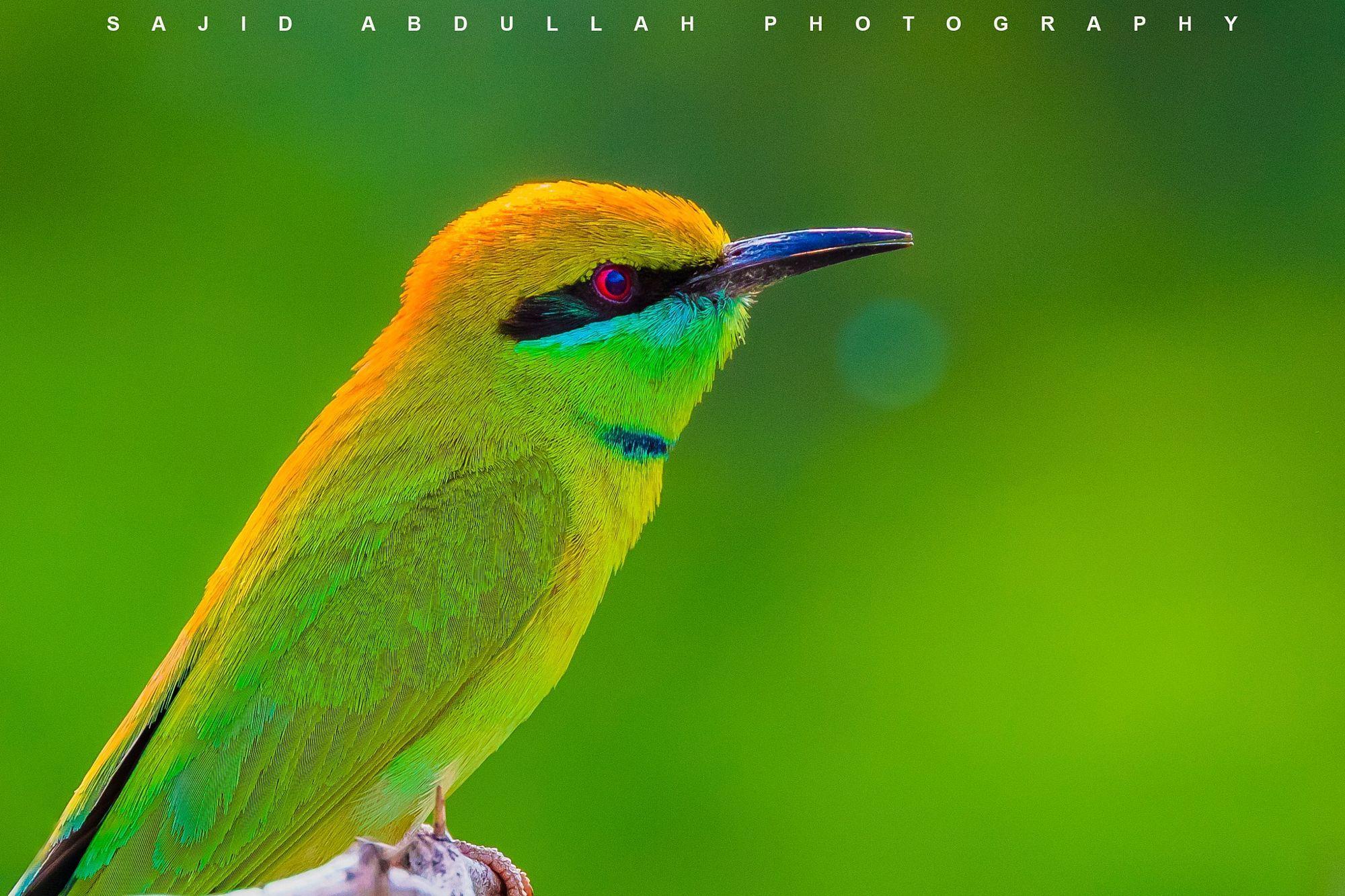 Colors of nature!! Animals photo by sprintsajid http://rarme.com ...