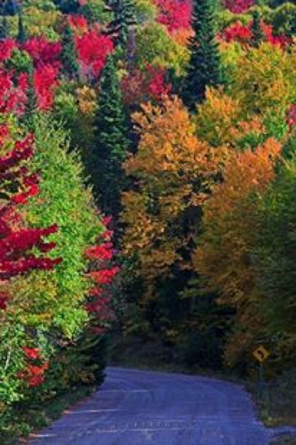 Colors of Nature, Tree, Wild, Woods, Nature, HQ Photo