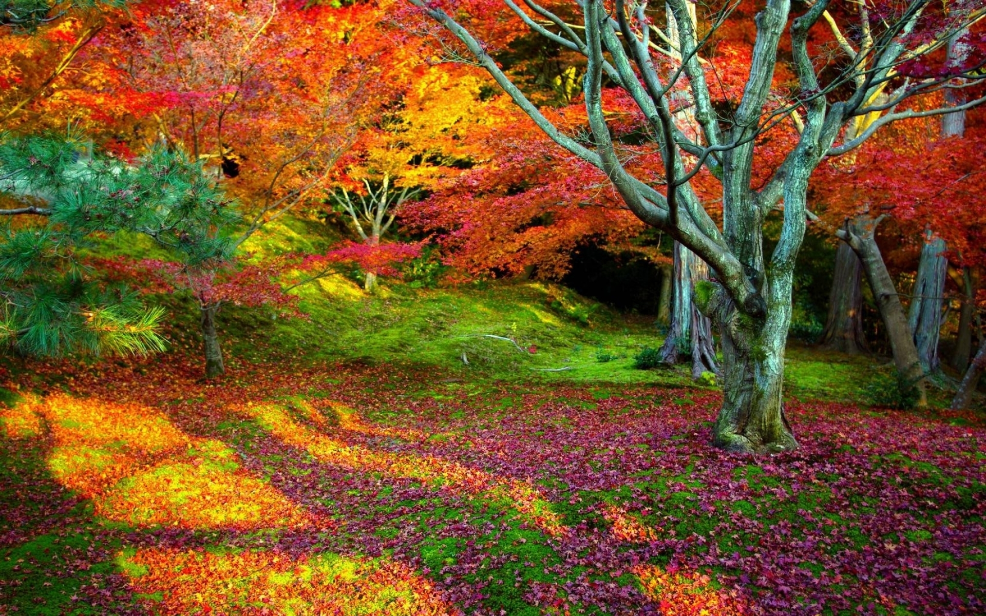 Nature & Landscape Colors of Nature wallpapers (Desktop, Phone ...