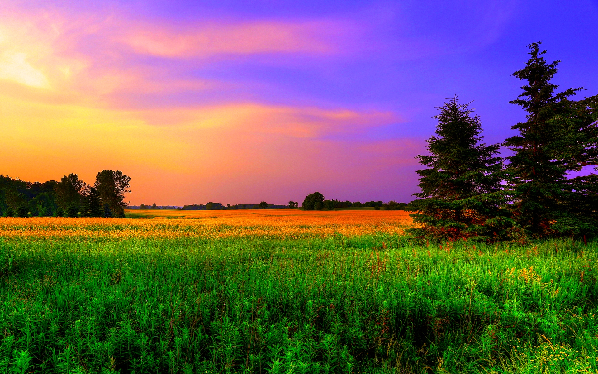 Colors Of Nature #6958338