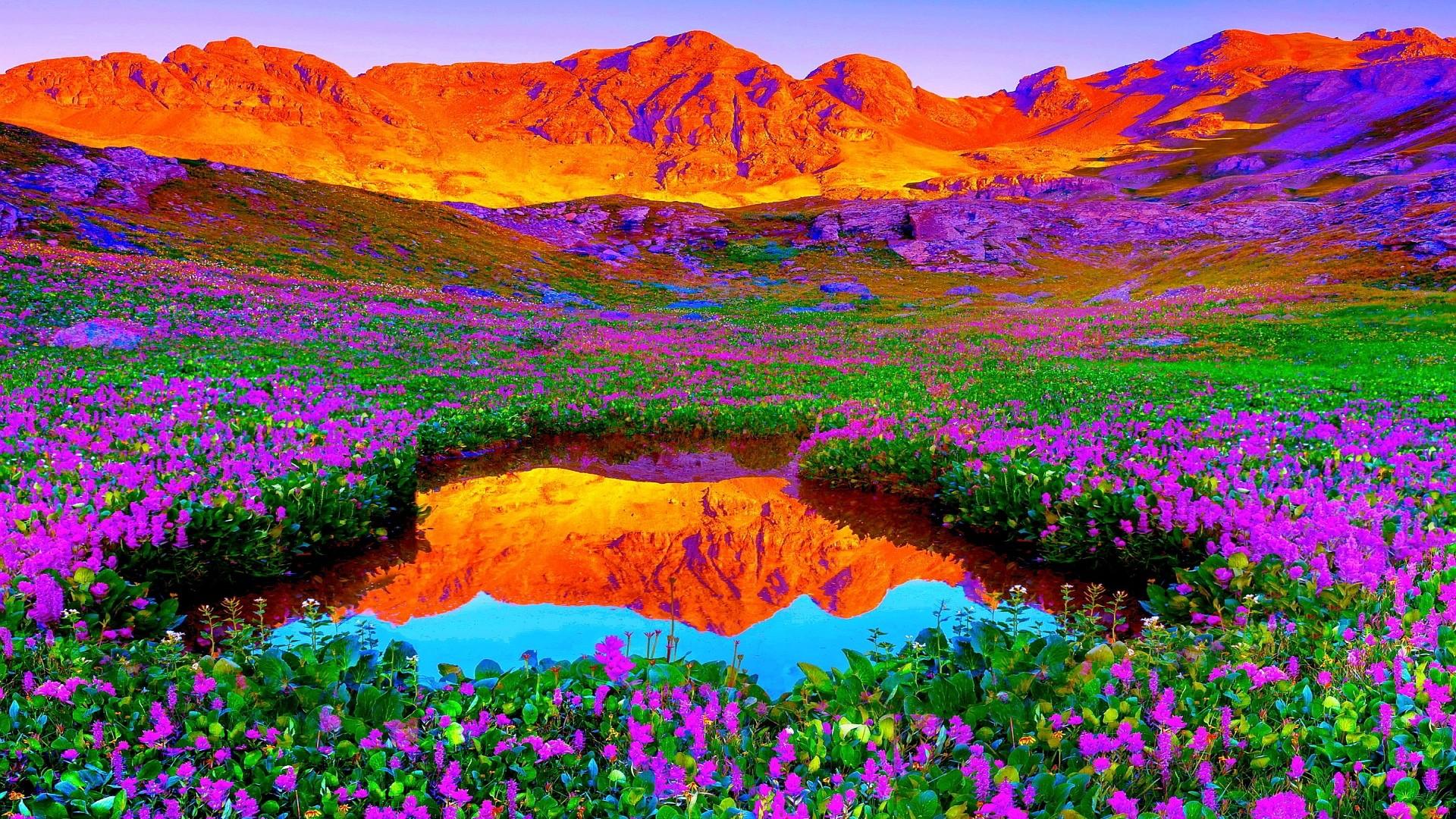 Brilliant Colors Of Nature HD Desktop Background - wallpaper21.com