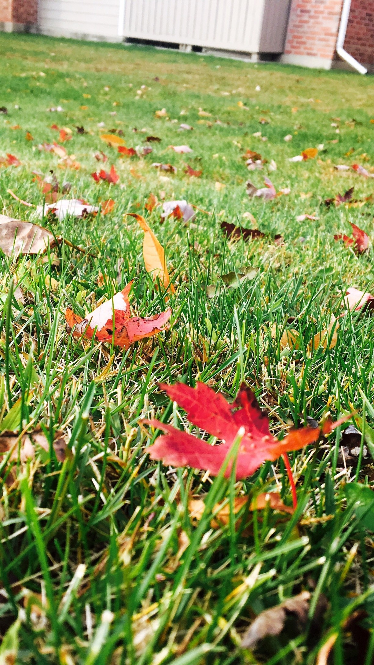 The Green at Chevy Chase, Lake County, Illinois - Colors of nature