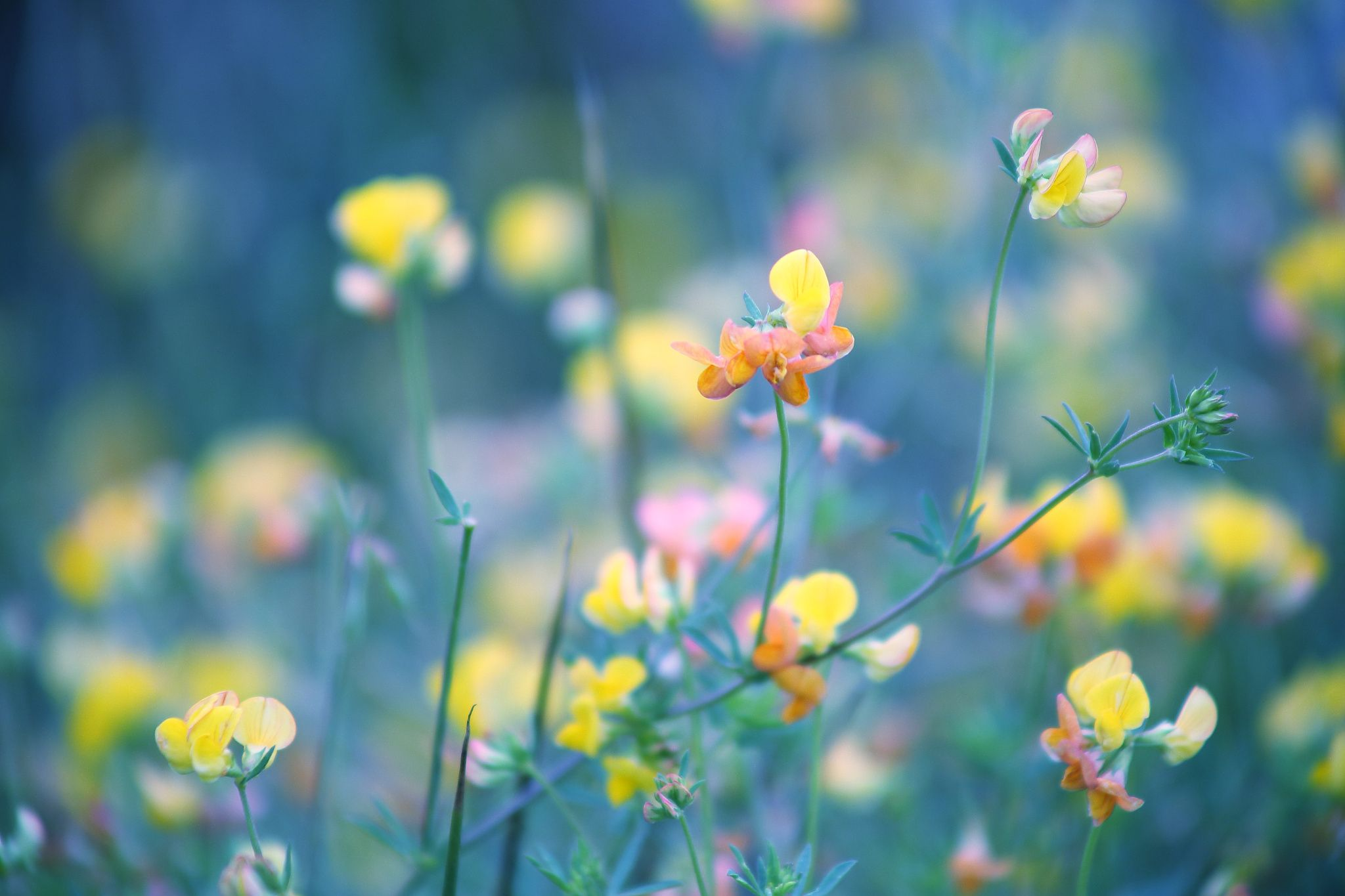 Colors of Nature !!! :-) by Jay Sabapathy on 500px | photography ...