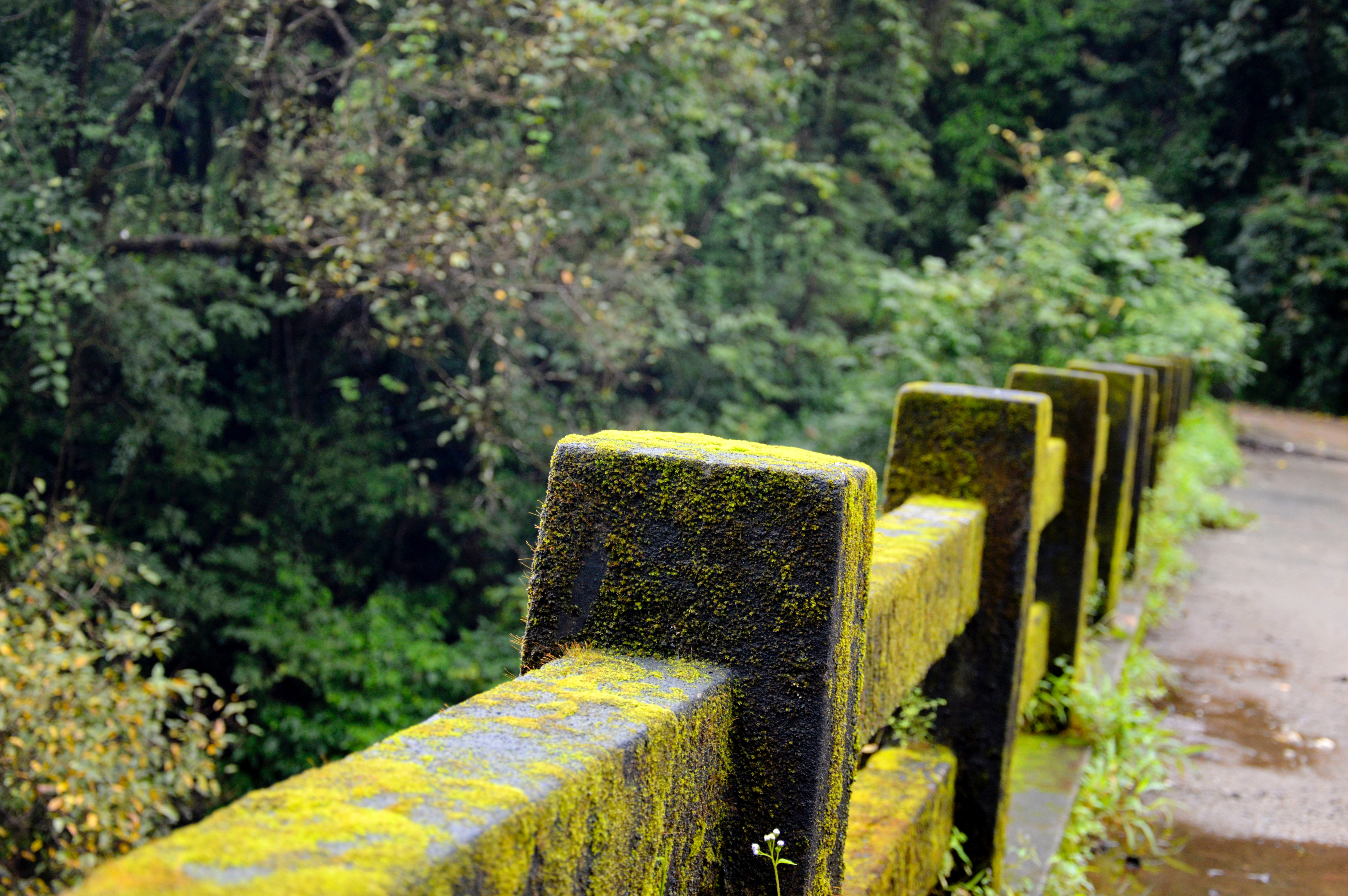 Concrete fence with green moss near green tree photo