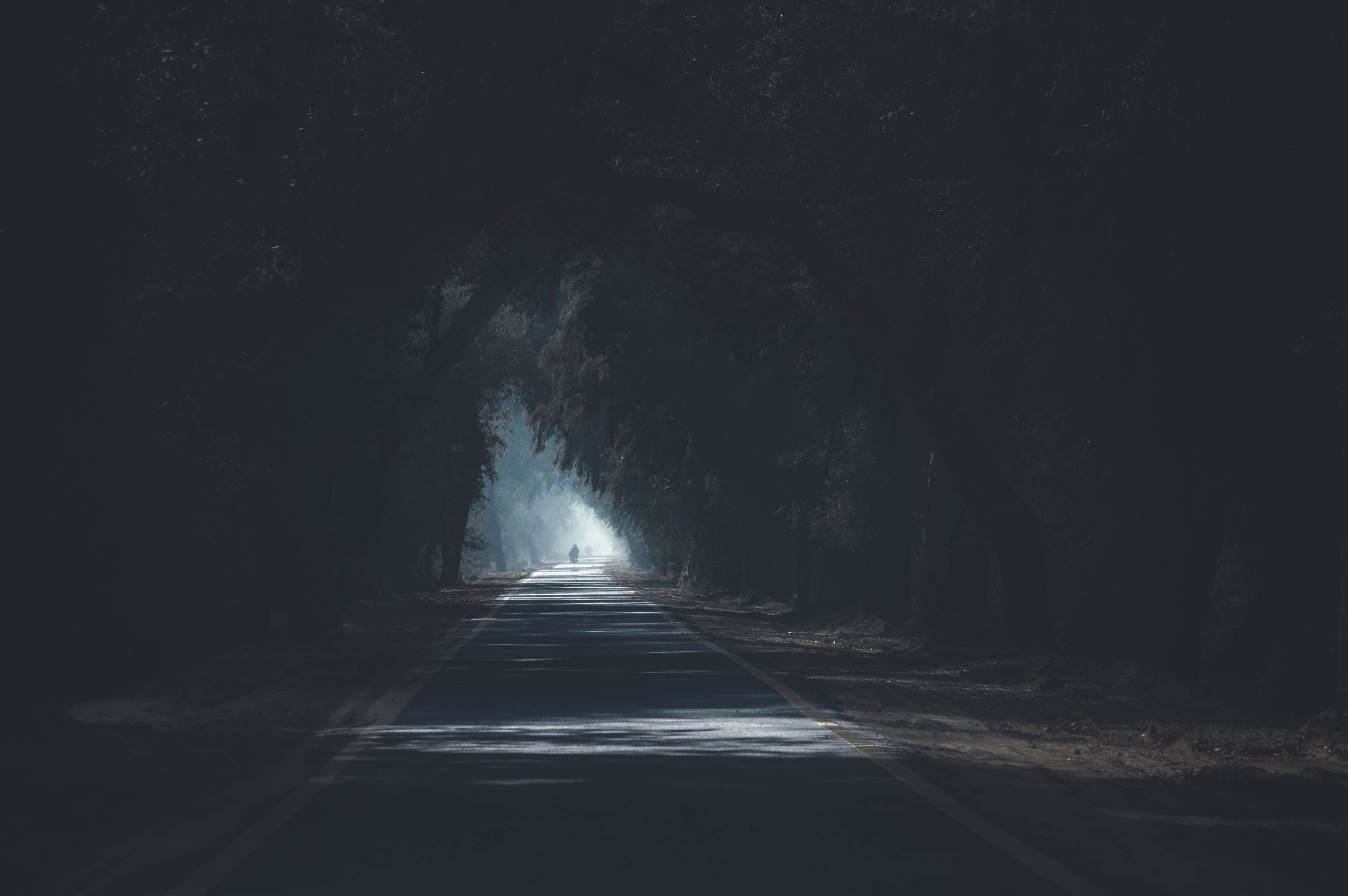 Concrete Road Surrounded by Trees, Blur, Concrete, Dark, Daylight, HQ Photo