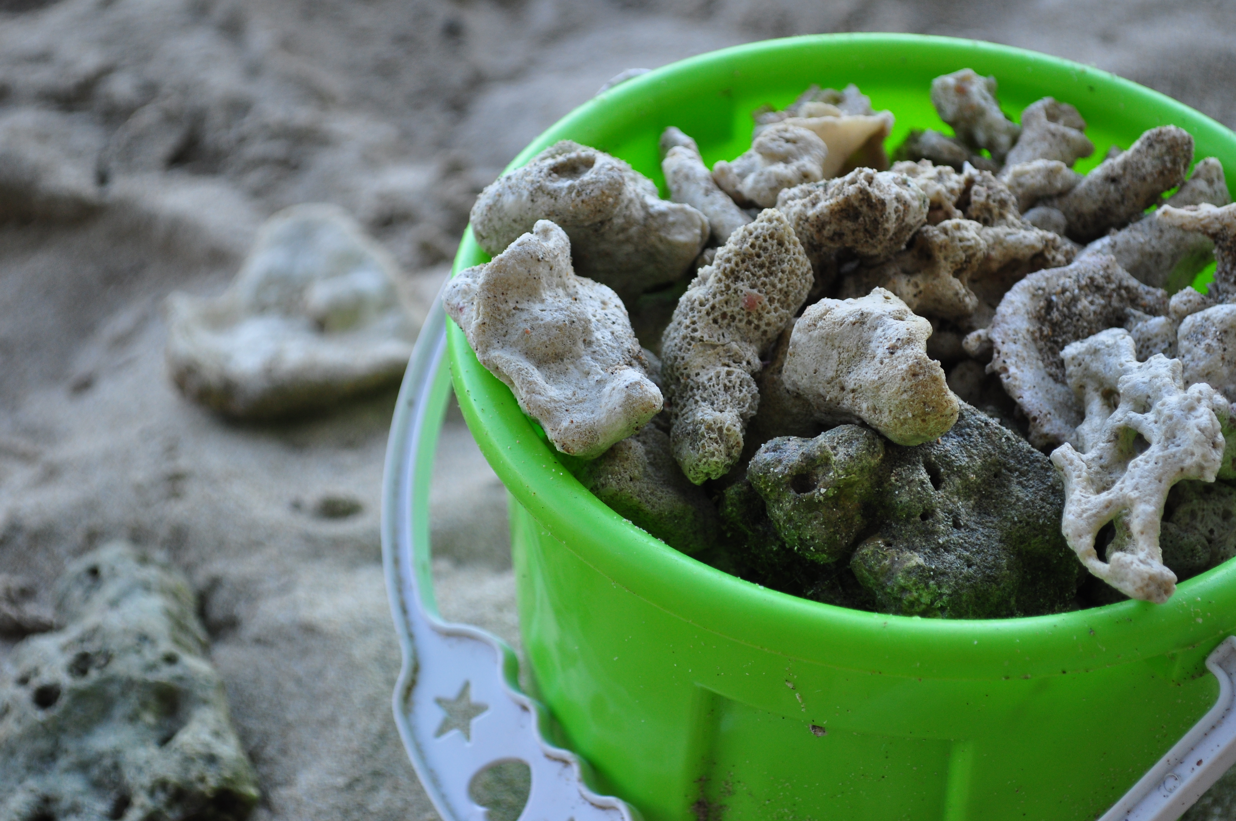 Corals in a toy pail, Beach, Collect, Corals, Gather, HQ Photo