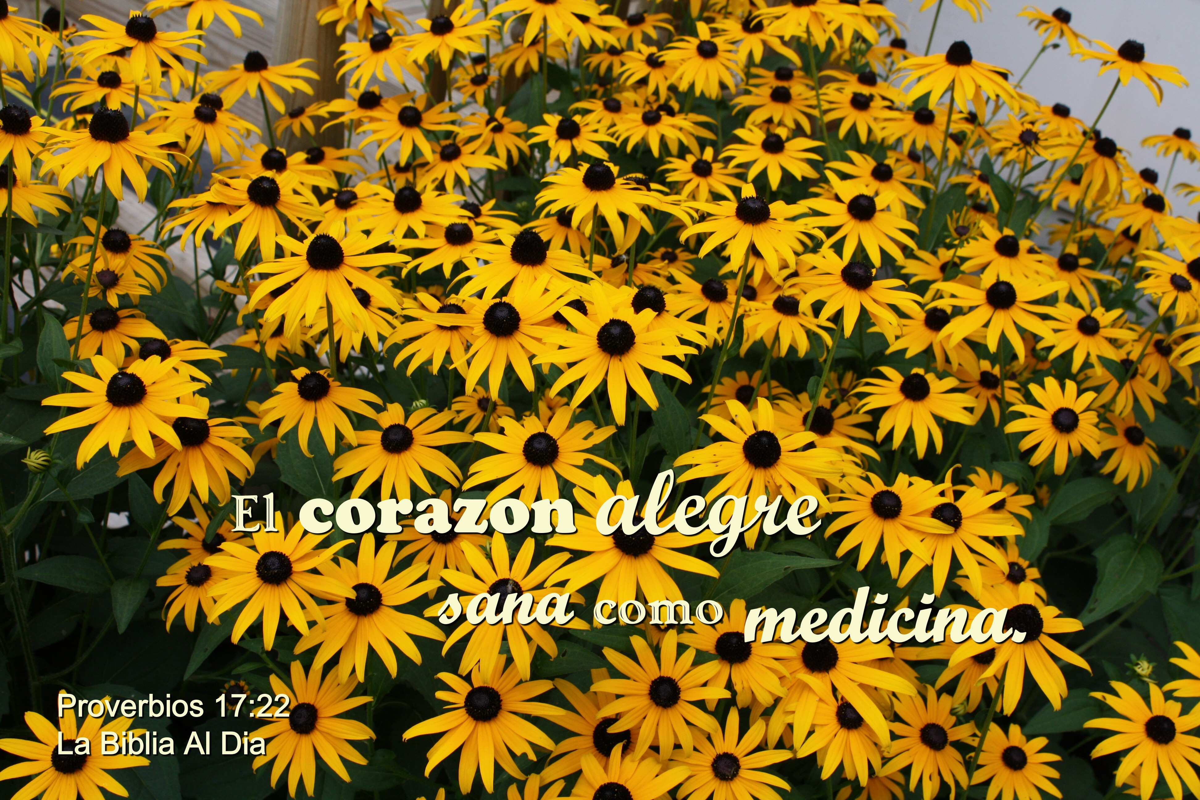 Corazon alegre como medicina photo