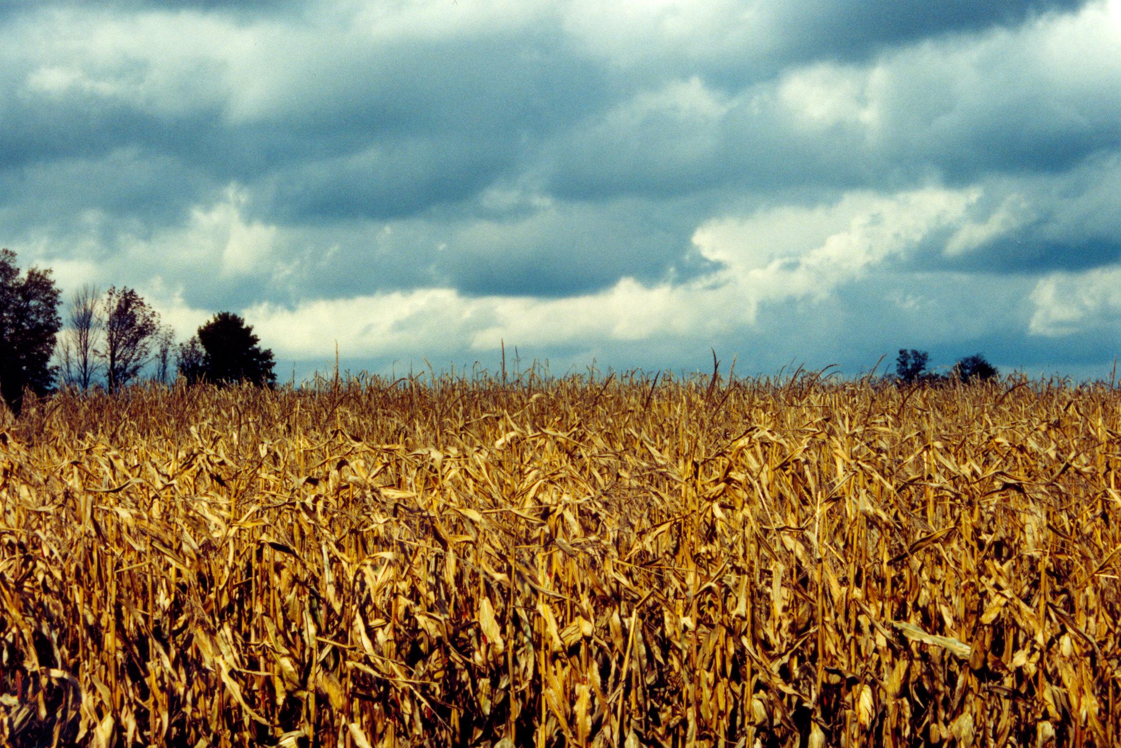 Corn Field in Autum by Nystagmuz-stock on DeviantArt
