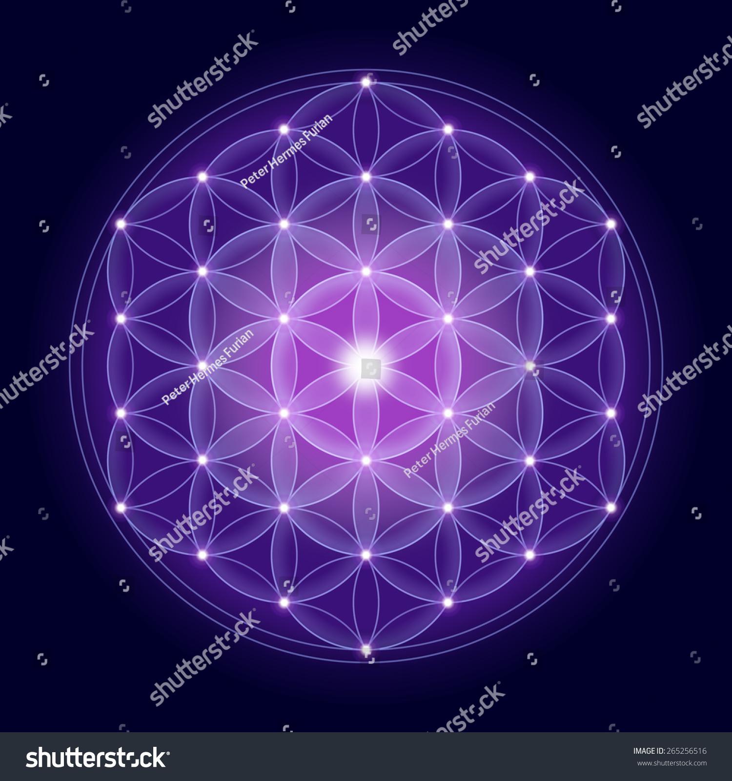 Cosmic Flower Life Stars On Dark Stock Illustration 265256516 ...