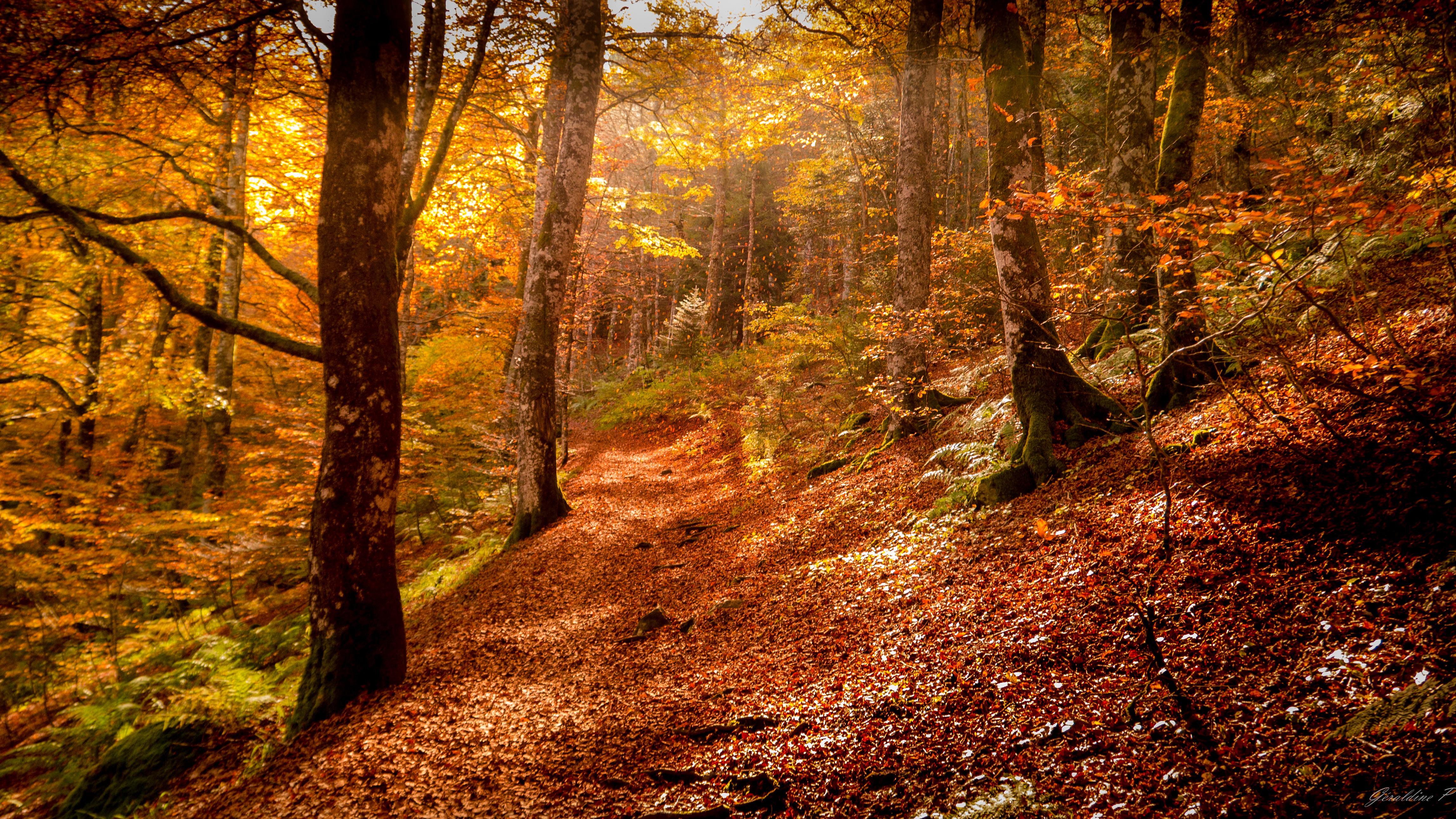 Couleur d'automne en Auvergne, Automne, Auvergne, Foliage, Forest, HQ Photo
