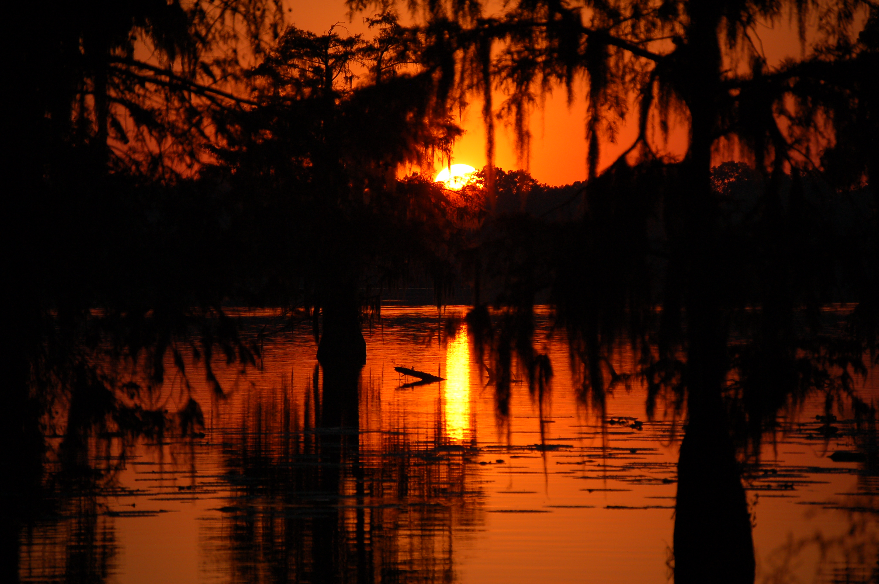 Country swamp photo
