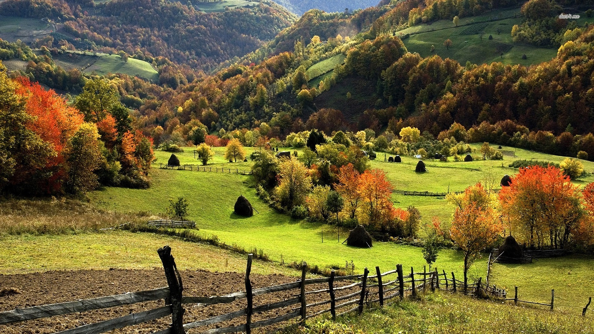 In the countryside photo