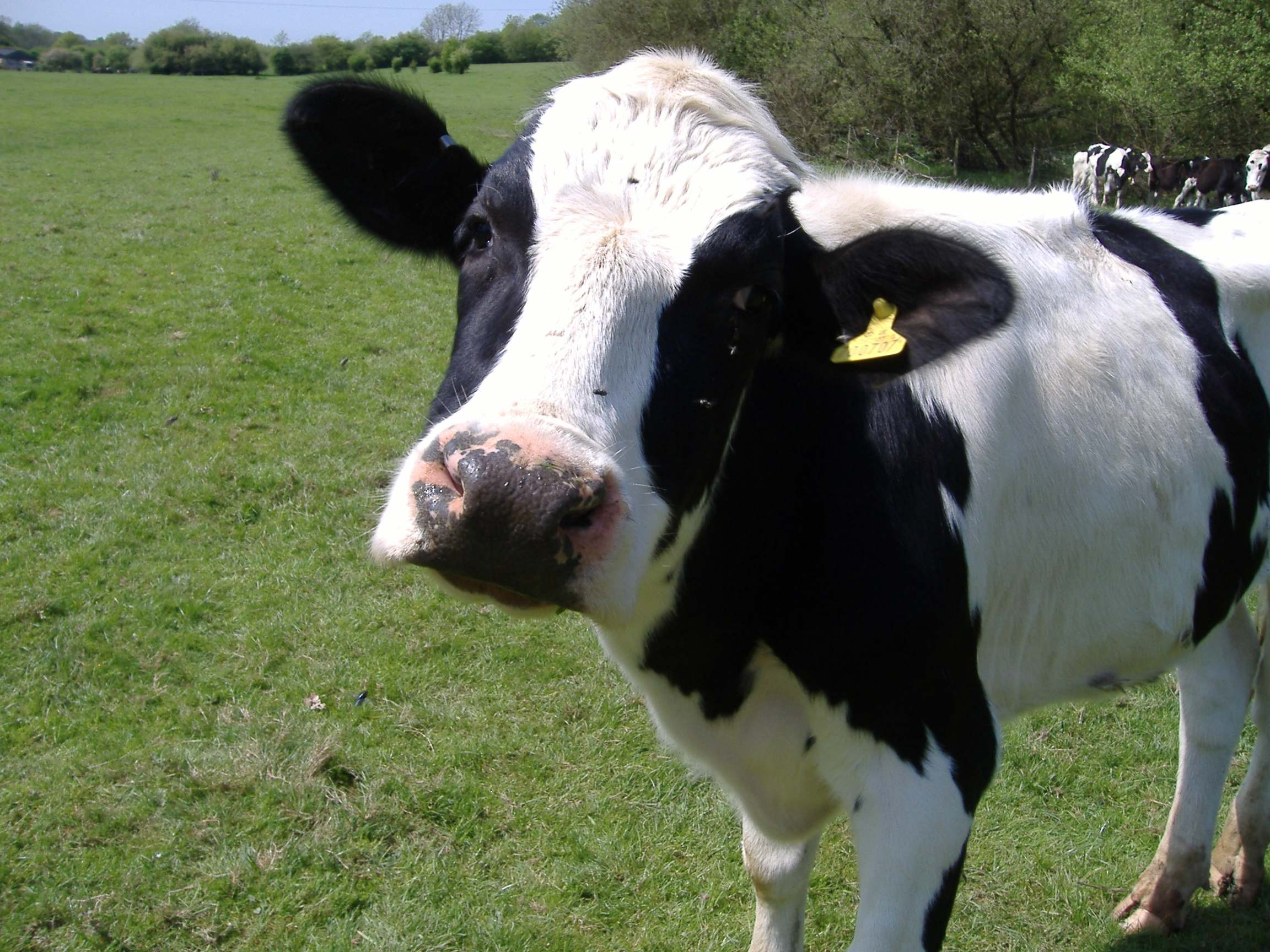 What's the singular form of 'cattle'? | Motivated Grammar