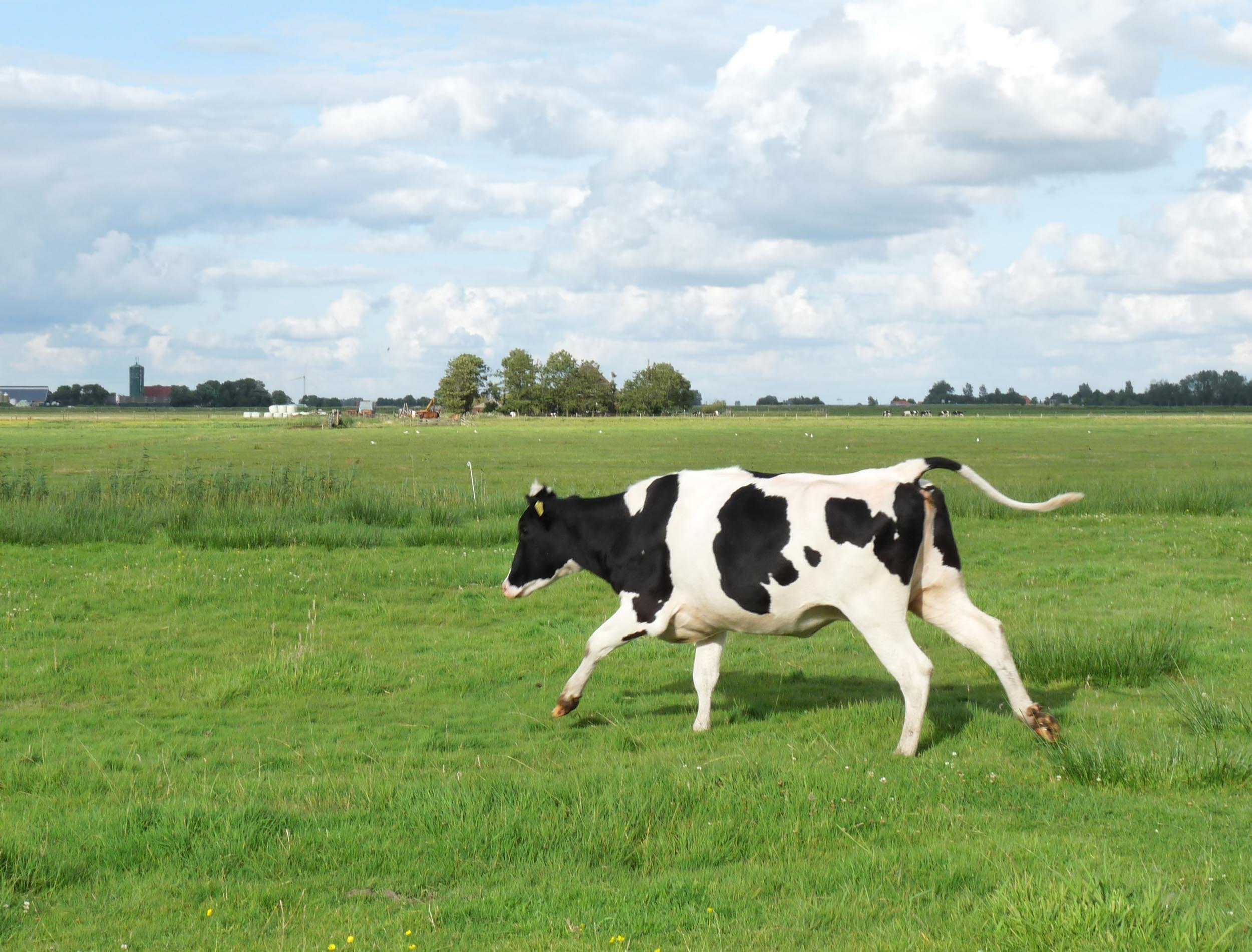 Cows in fields - in search of the facts | UK World Animal Protection
