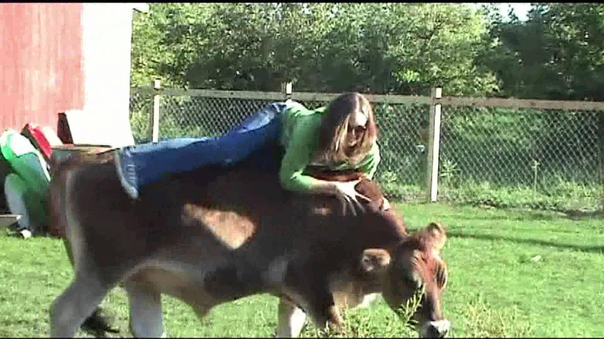 Cow ride photo