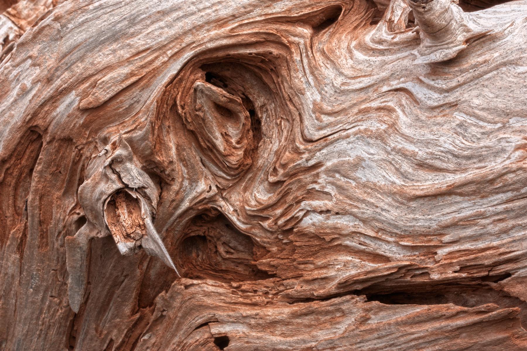 Cracked beachwood texture - hdr photo
