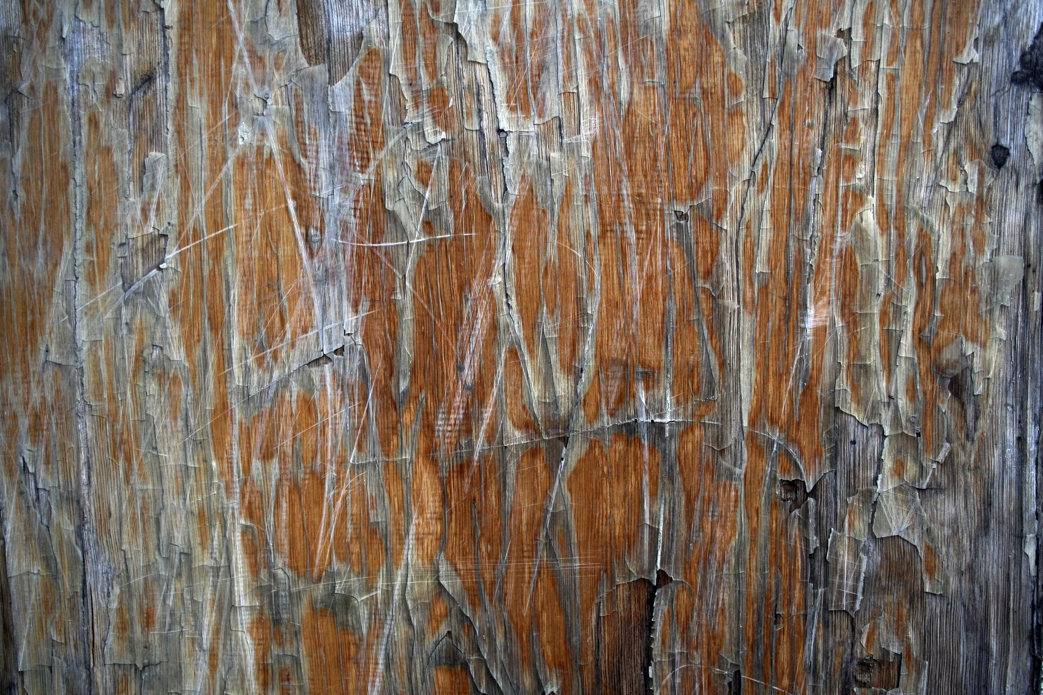 Grunge wood texture photo