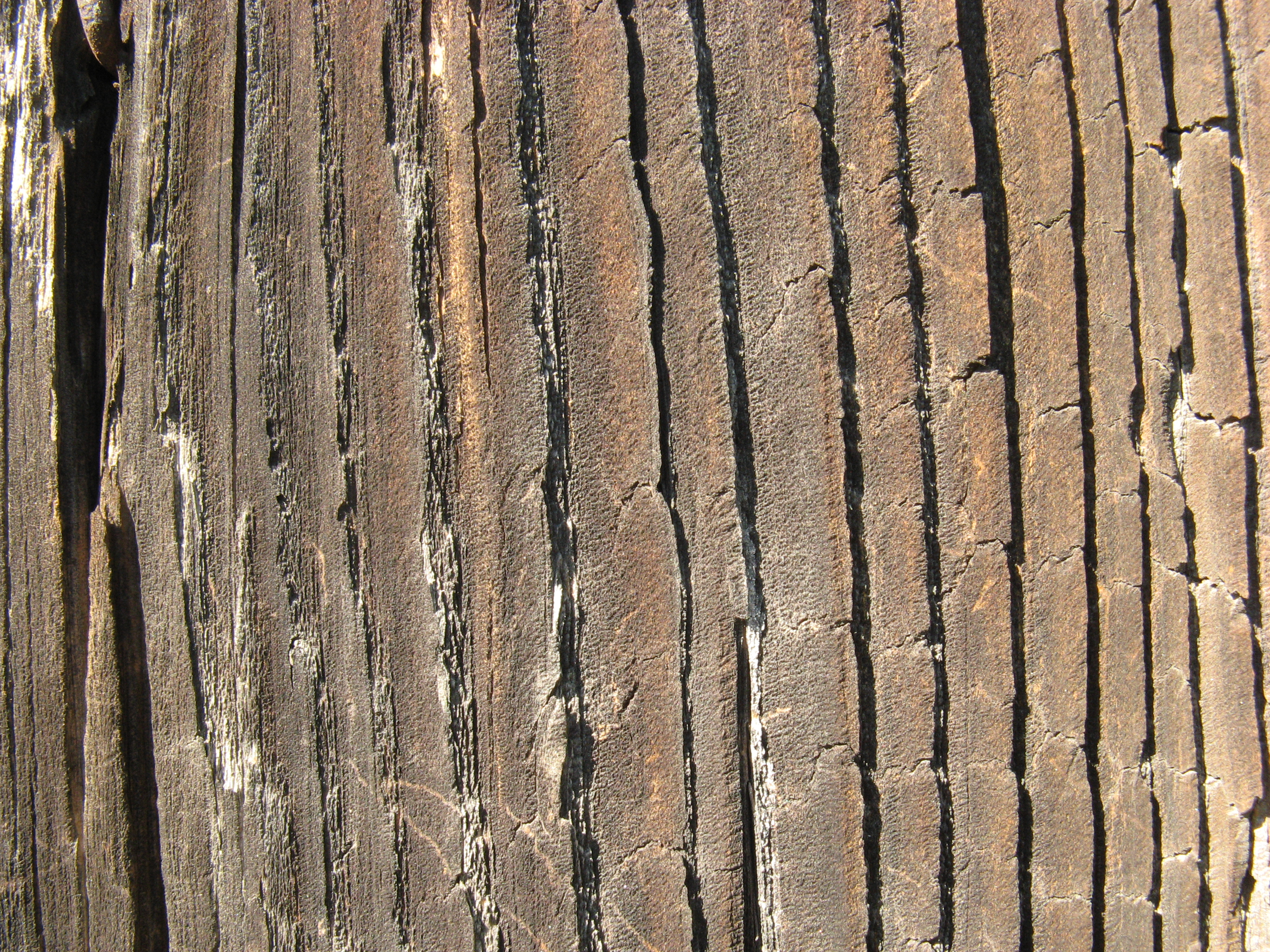 Cracked wood texture photo
