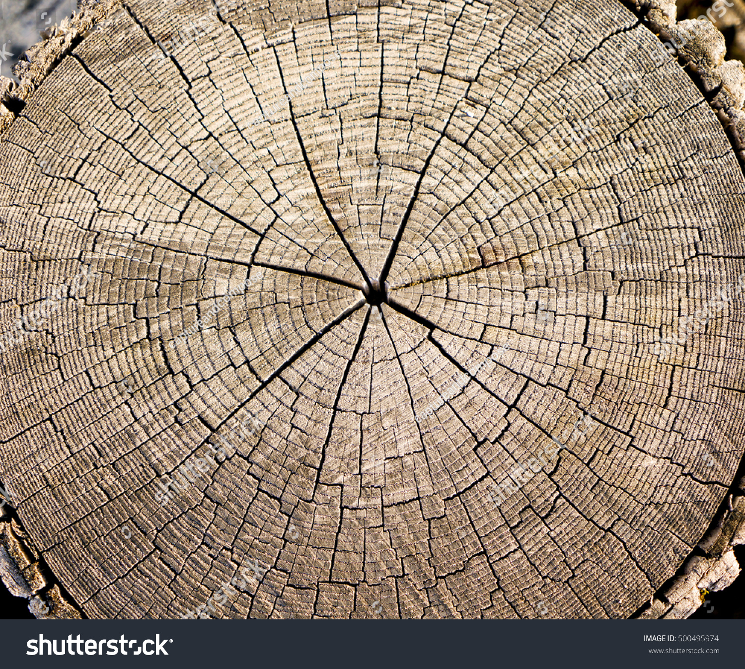 Royalty-free Cracked wood texture of a tree with… #500495974 Stock ...