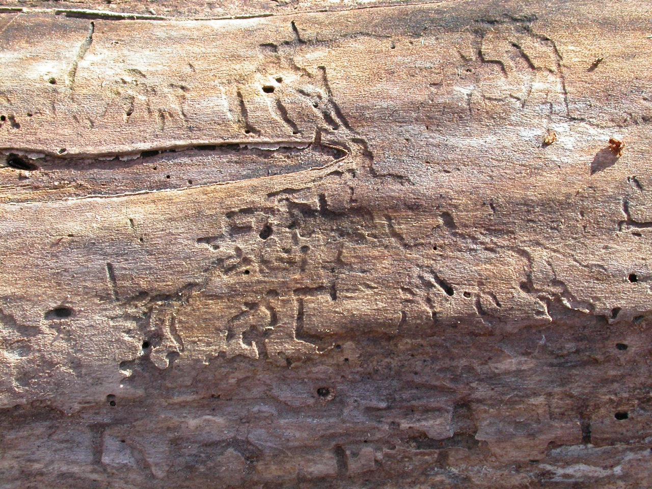 Cracked wood texture photo
