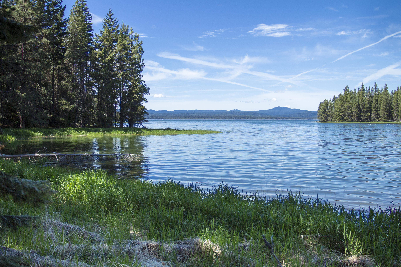 Crane Prairie Reservoir, Oregon, Crane, Forest, Grass, Lake, HQ Photo