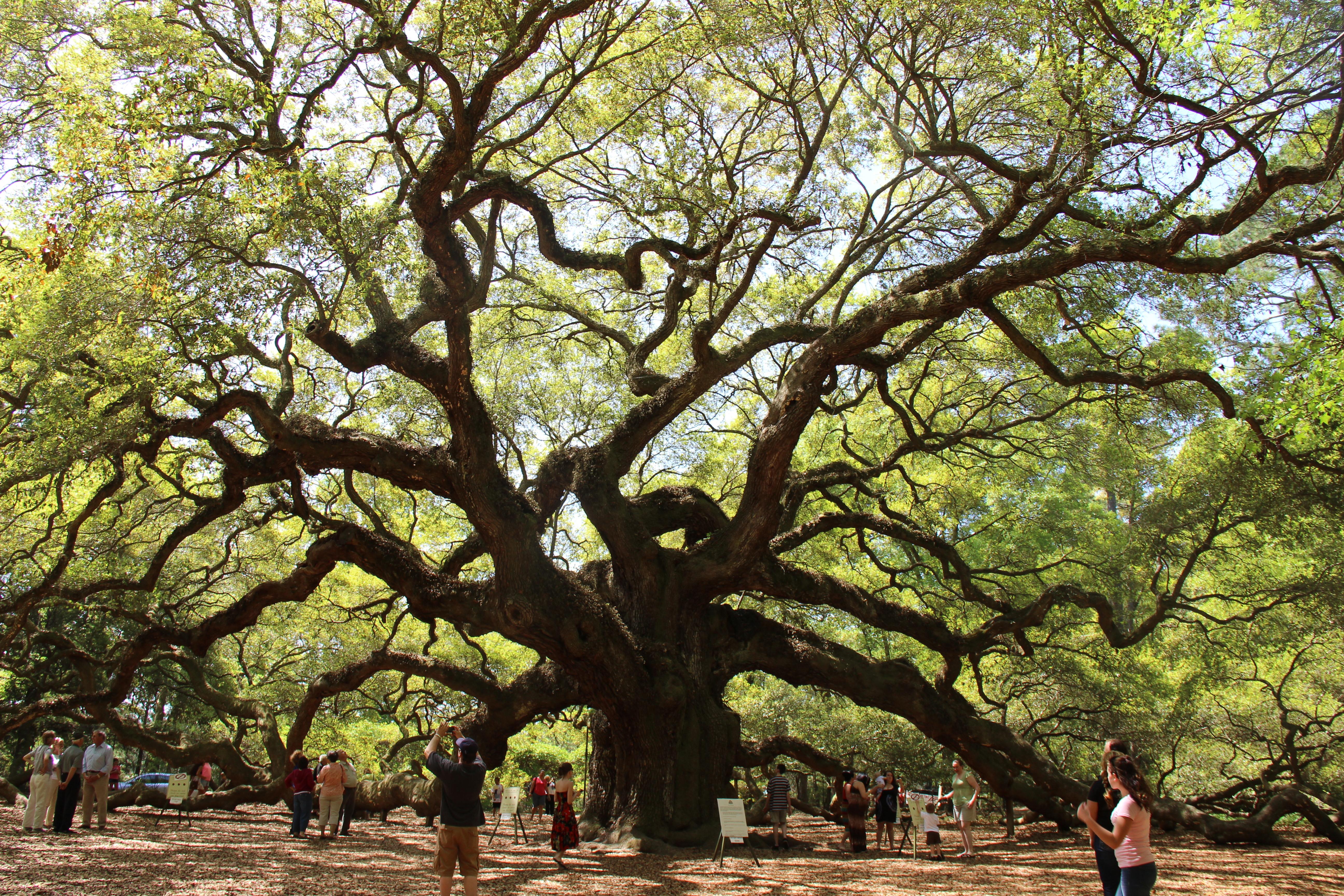 Crazy tree photo