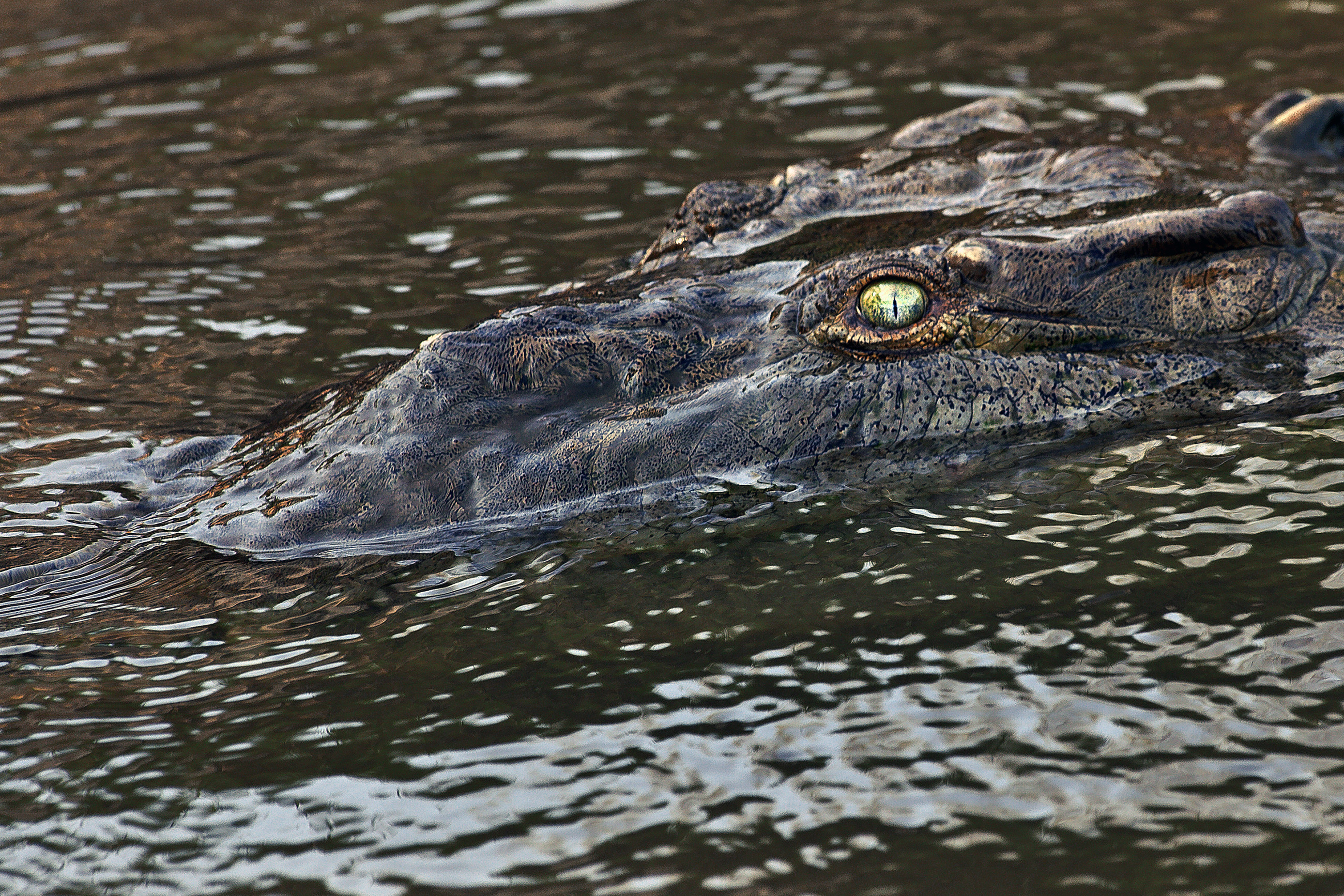 Crocodile, Power, Predator, Profile, Reptile, HQ Photo