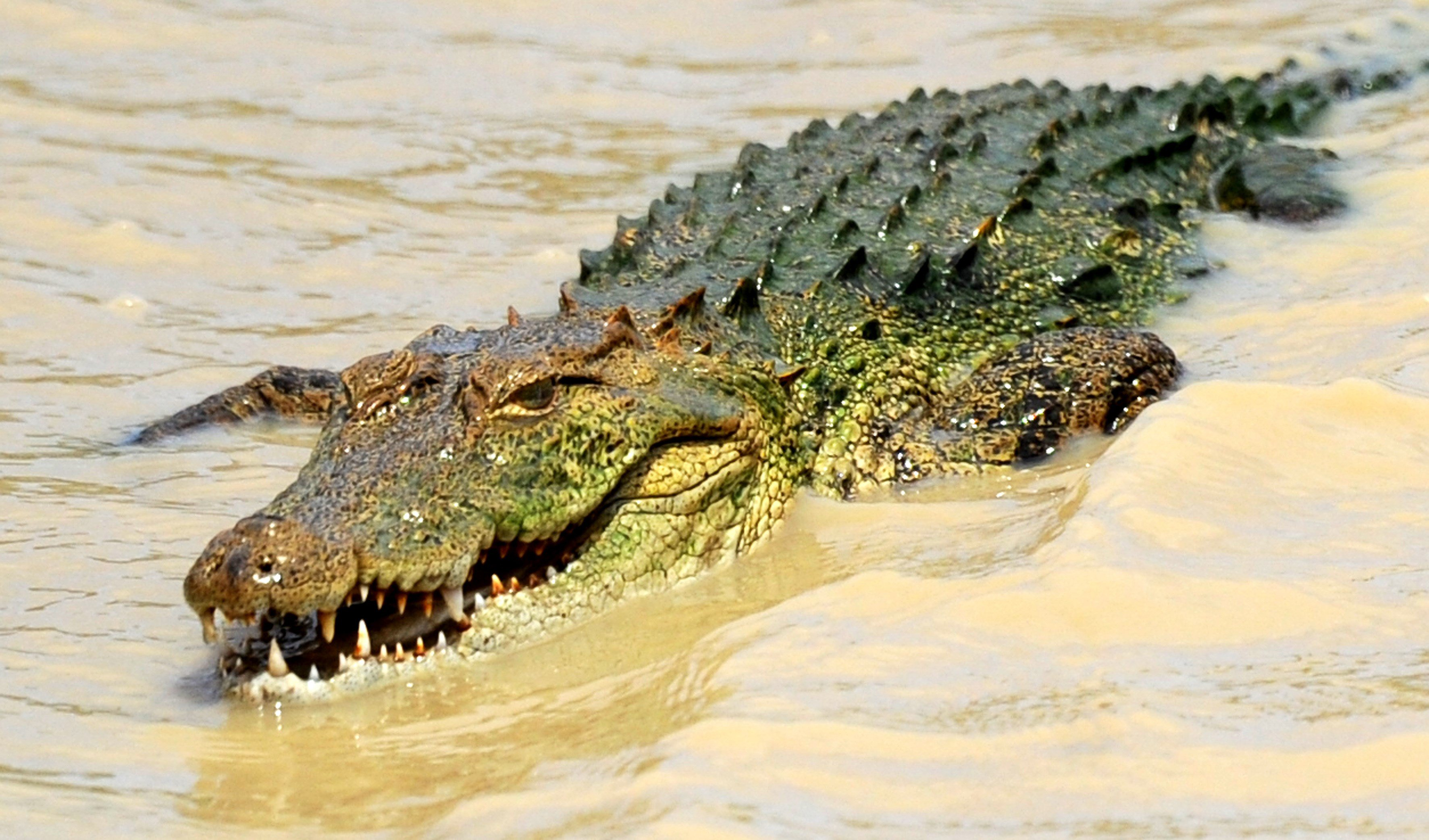 Watch this Crocodile Leap Out of the Water | Time
