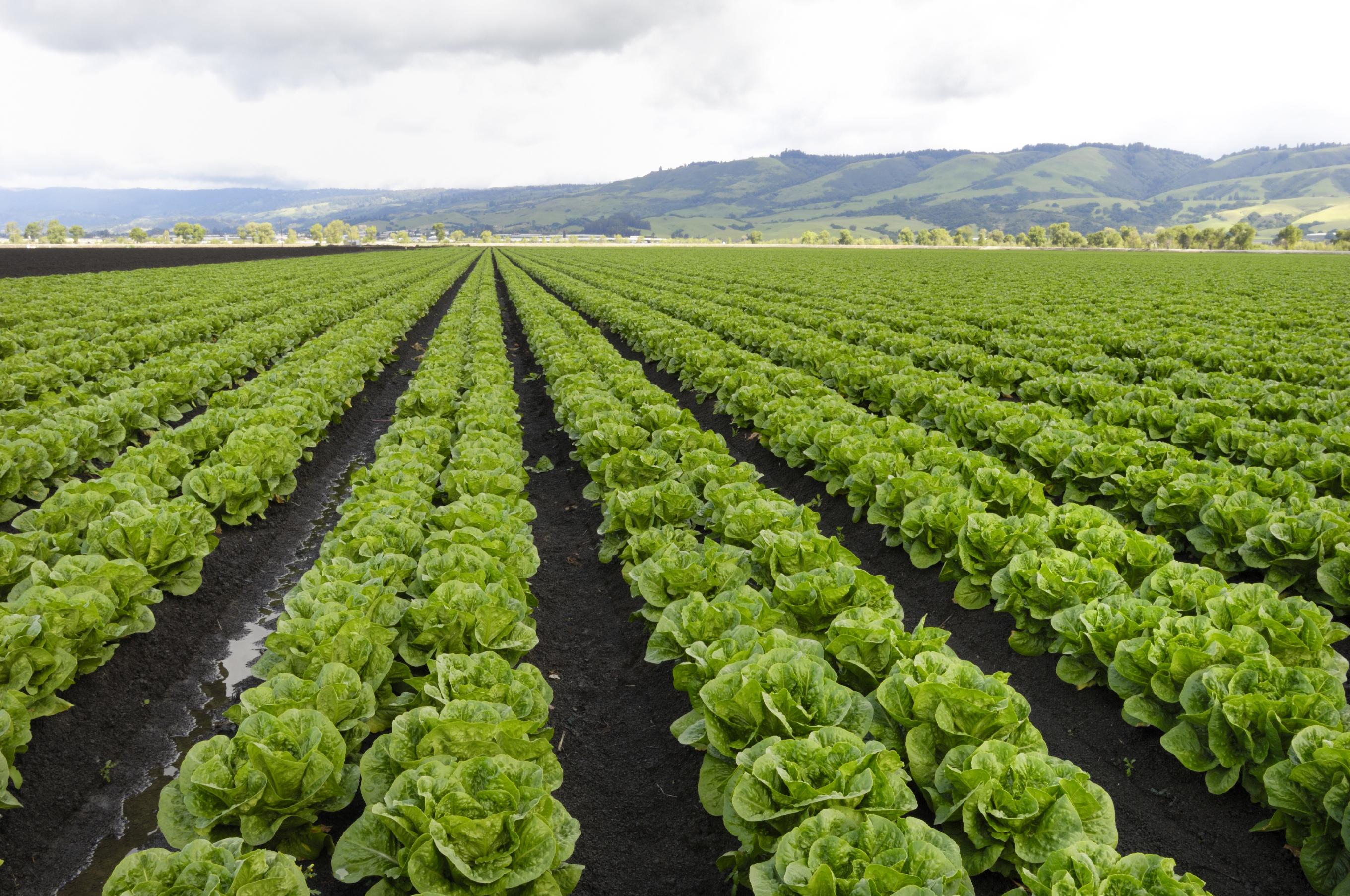 crops8.jpg